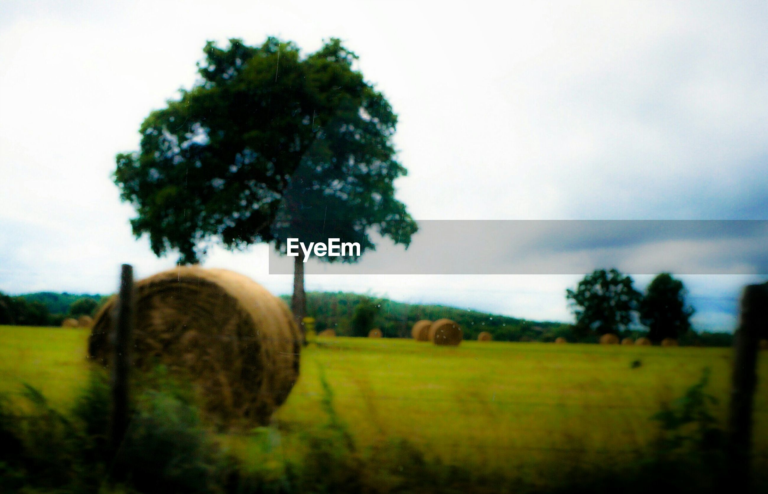 bale, field, agriculture, tree, hay bale, landscape, farm, hay, rolled up, grass, nature, tranquility, rural scene, beauty in nature, tranquil scene, no people, sky, scenics, growth, day, outdoors