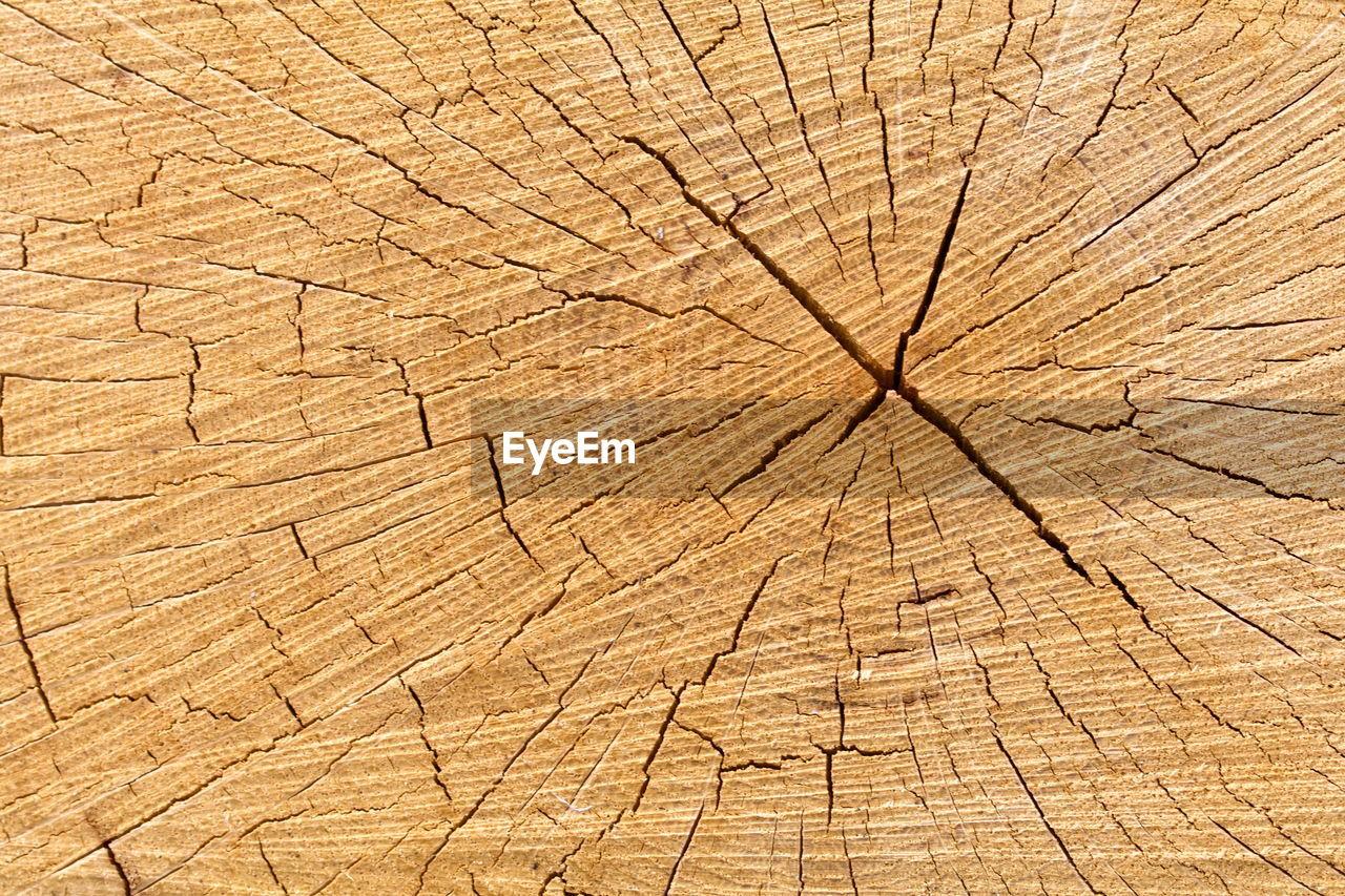 FULL FRAME SHOT OF CRACKED TREE STUMP