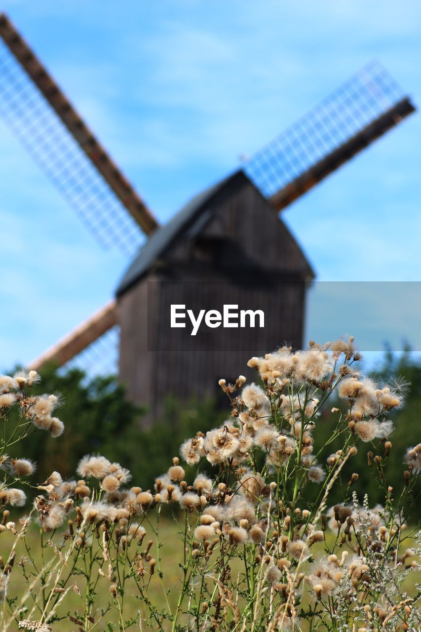 Dried Flowers On Field With Traditional Windmill In Background