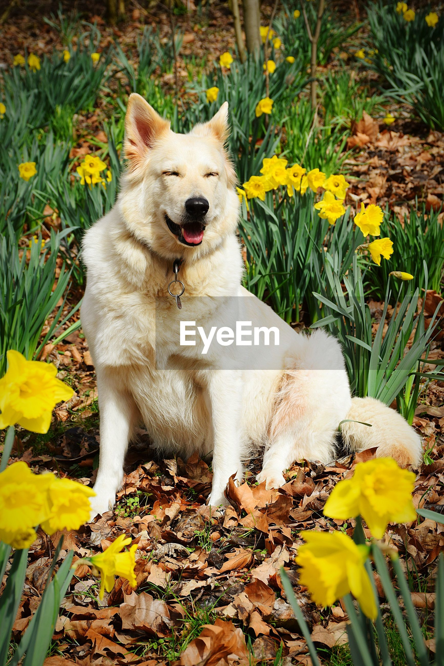 View of white dog on field