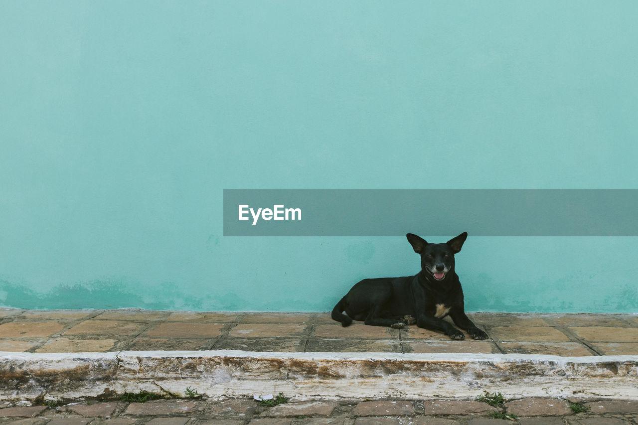 Dog Resting On Sidewalk Against Turquoise Wall