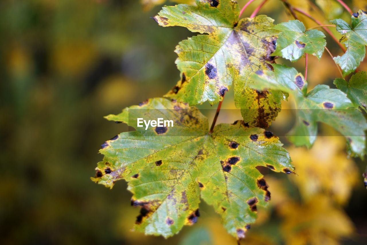 leaf, plant part, plant, close-up, growth, green color, nature, day, beauty in nature, no people, selective focus, autumn, outdoors, focus on foreground, animal, tree, leaf vein, leaves, animal themes, animals in the wild, change