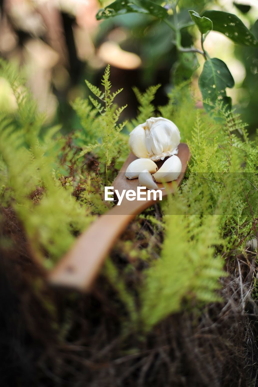 selective focus, plant, growth, no people, close-up, vegetable, nature, mushroom, green color, toadstool, day, beauty in nature, fungus, white color, field, land, food, animal wildlife, grass, vulnerability