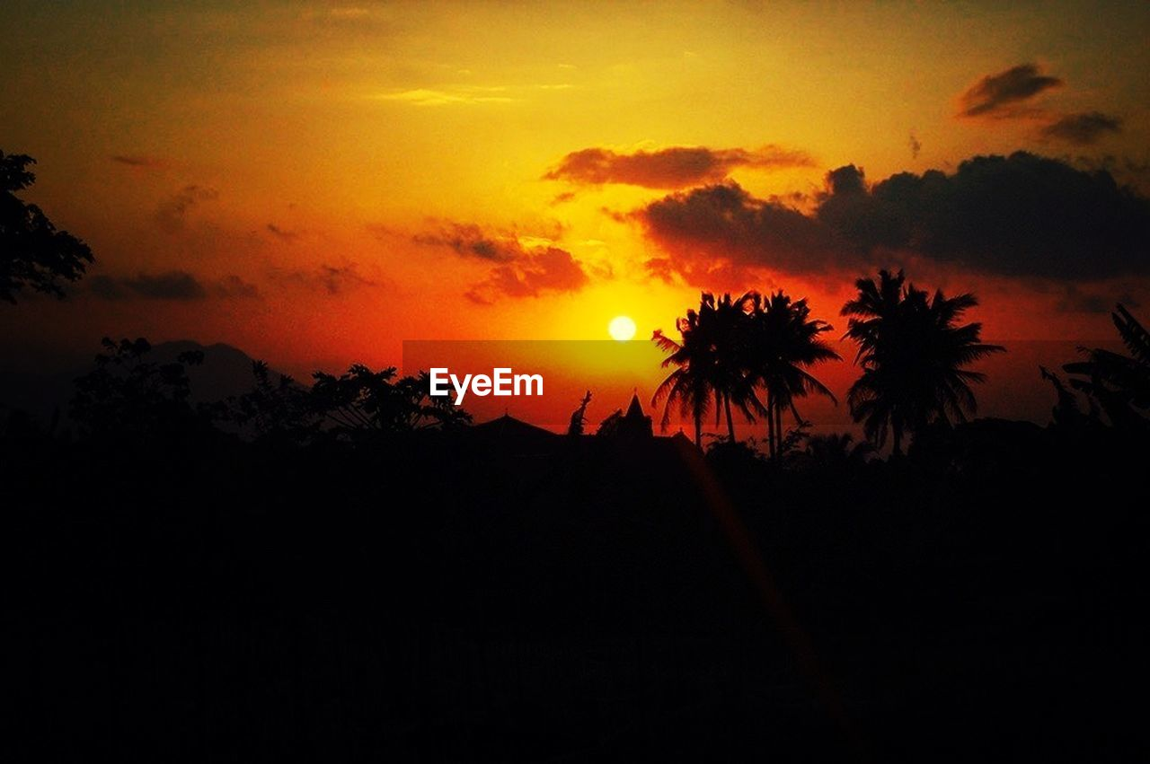 sunset, silhouette, tree, beauty in nature, nature, sun, scenics, sky, orange color, tranquil scene, growth, tranquility, palm tree, outdoors, cloud - sky, no people, landscape