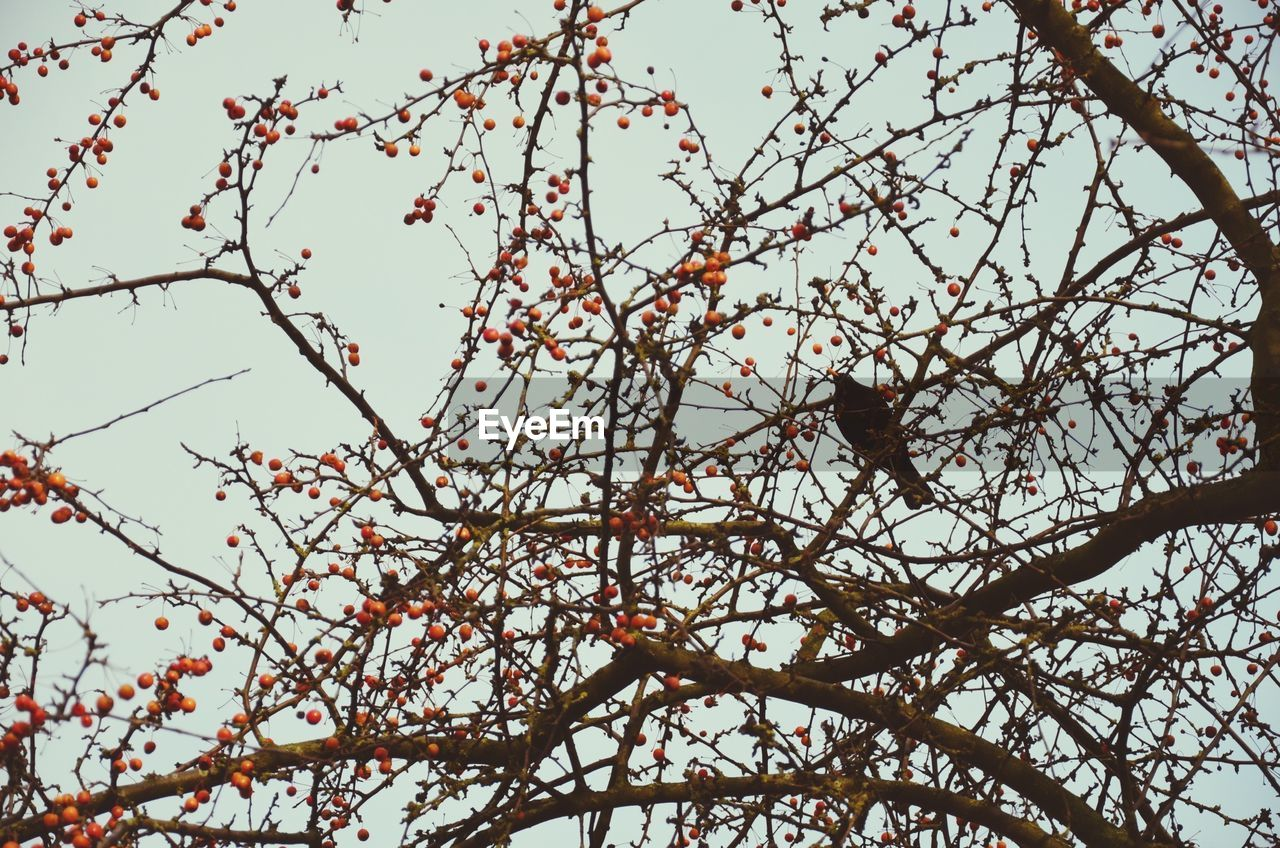 tree, branch, low angle view, beauty in nature, nature, growth, no people, day, twig, outdoors, flower, perching, animals in the wild, animal themes, bird, springtime, freshness, fragility, close-up, sky