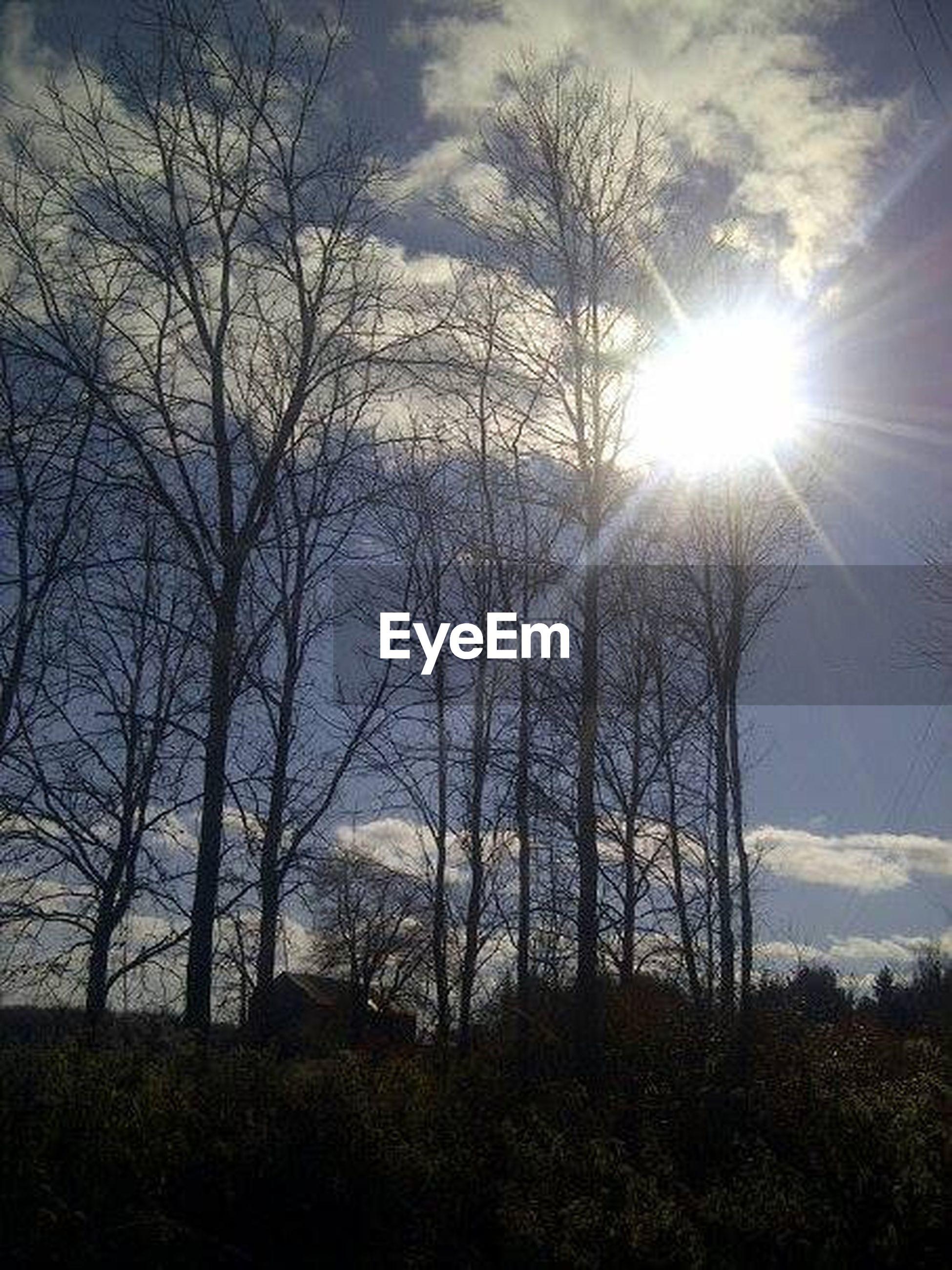 sun, bare tree, tree, sunbeam, tranquility, sky, tranquil scene, sunlight, scenics, beauty in nature, nature, branch, lens flare, cloud - sky, silhouette, landscape, sunset, growth, field, non-urban scene