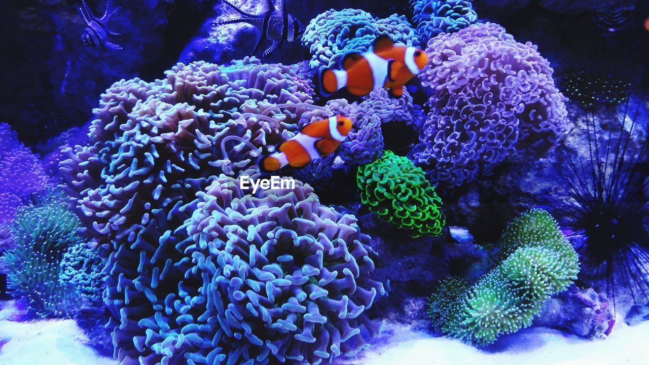 underwater, sea, sea life, animal wildlife, undersea, animals in the wild, invertebrate, coral, animal themes, marine, animal, water, fish, nature, group of animals, swimming, beauty in nature, reef, no people, clown fish, ecosystem