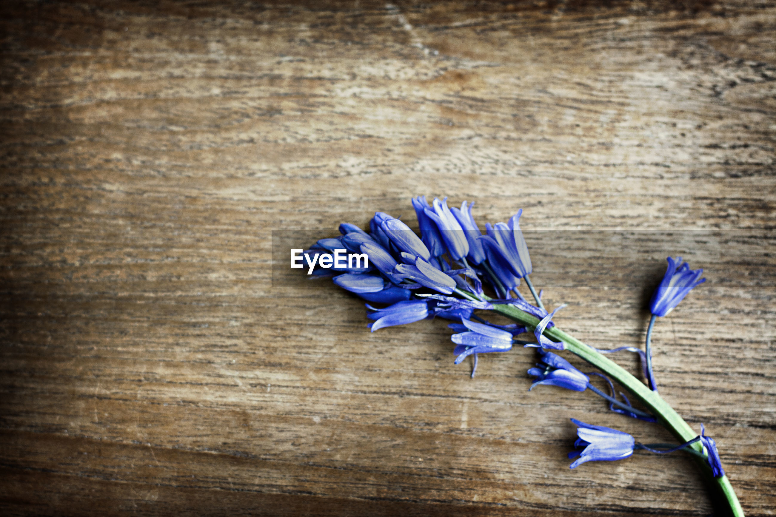 CLOSE-UP OF PURPLE FLOWER ON WOODEN TABLE