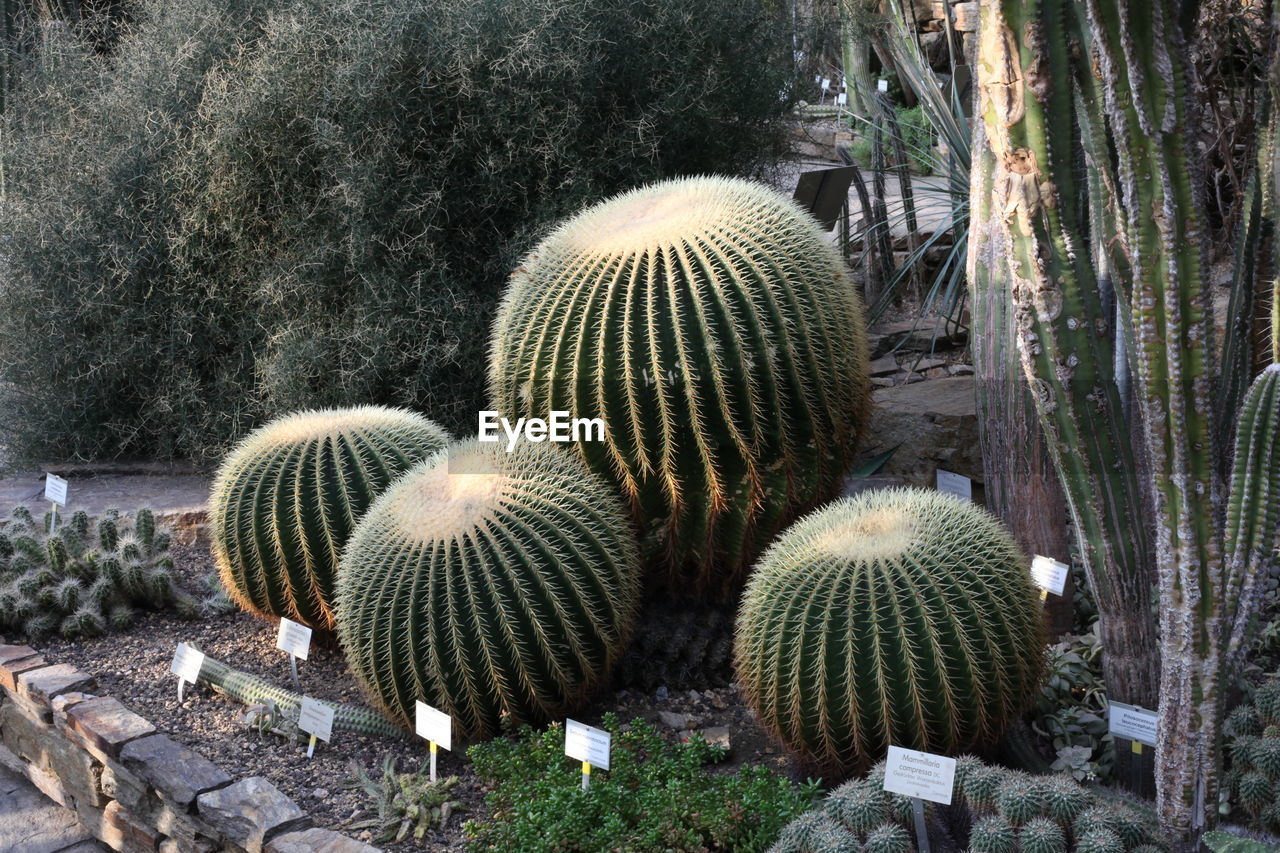 Cactuses with information signs in park