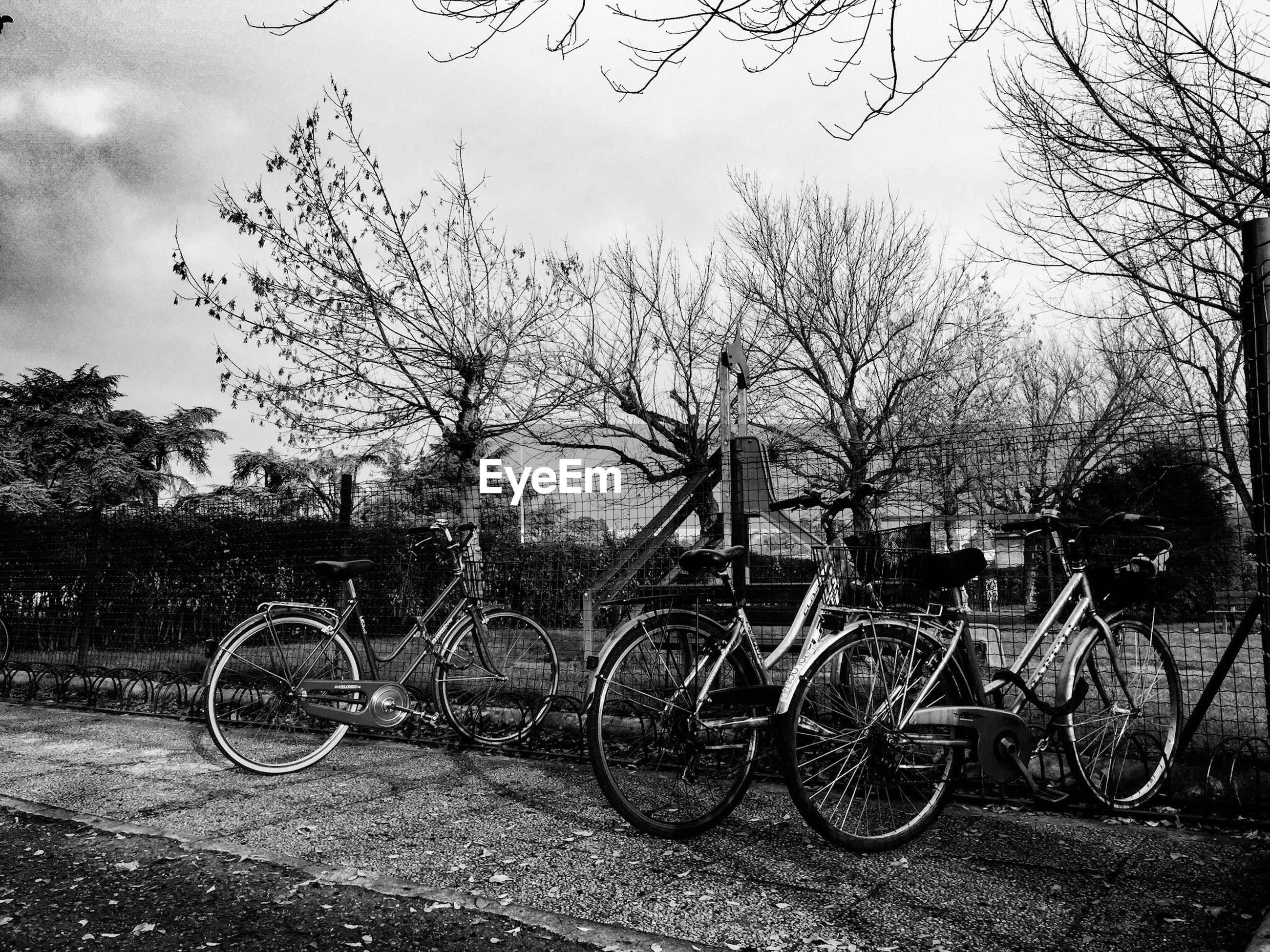 Bicycles parked in rack by fence against trees