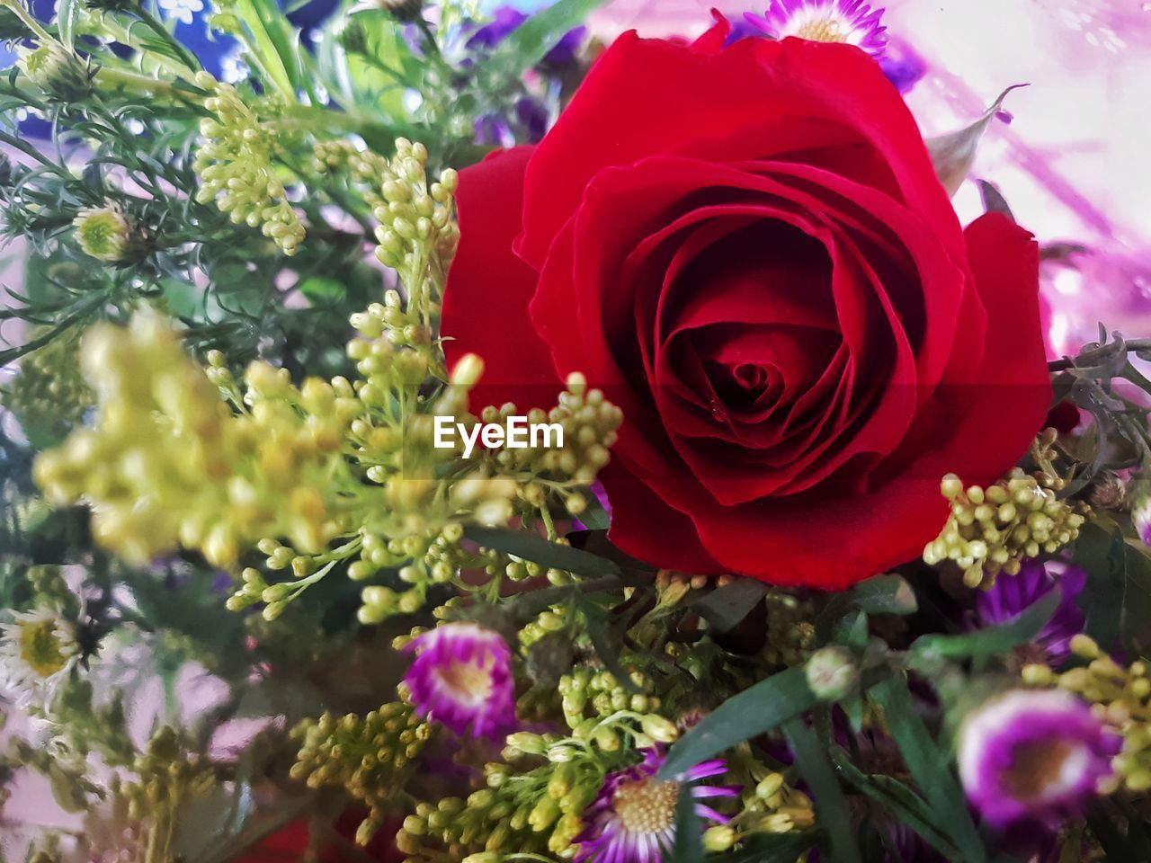 flower, plant, rose, beauty in nature, flowering plant, rose - flower, vulnerability, fragility, petal, close-up, freshness, flower head, inflorescence, nature, red, no people, growth, day, outdoors, leaf, bouquet, flower arrangement