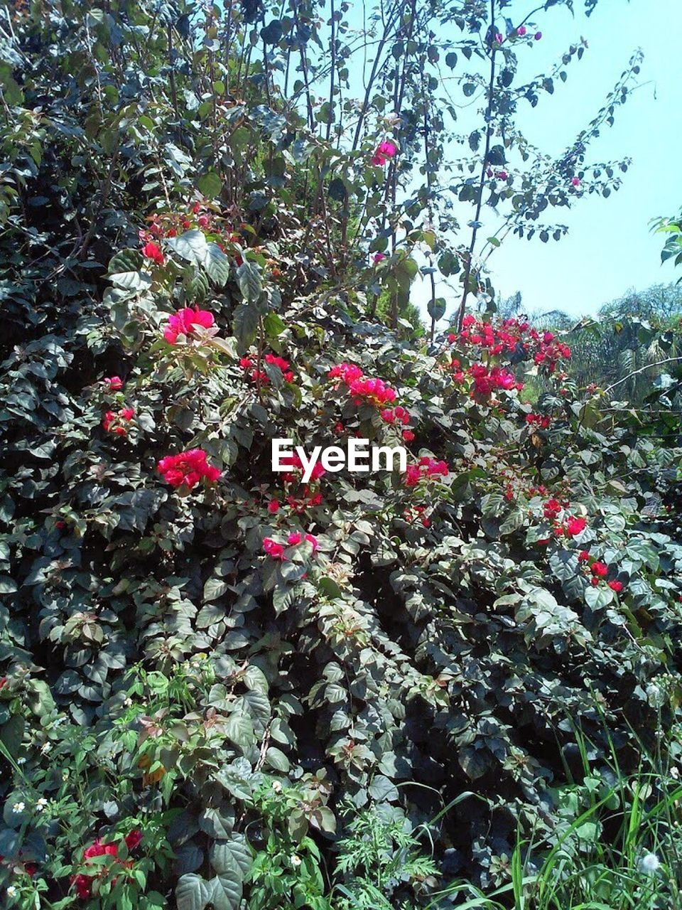 growth, red, blossom, shrub, flower, vegetation, nature, foliage, spring, plant, no people, beauty in nature, outdoors, day, tree