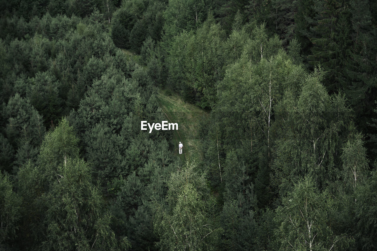 Aerial View Of Person In Forest