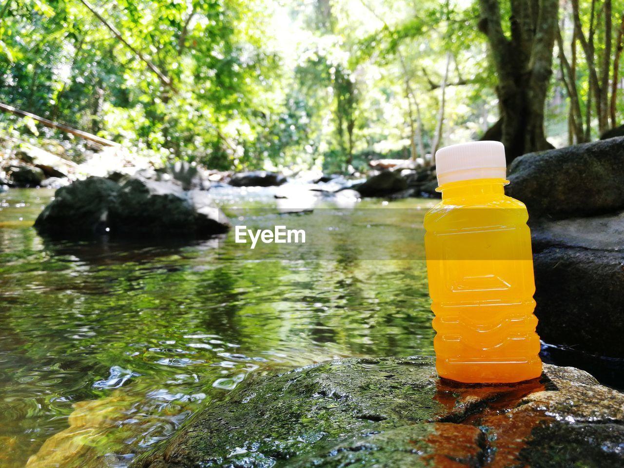Drink in bottle by stream in forest