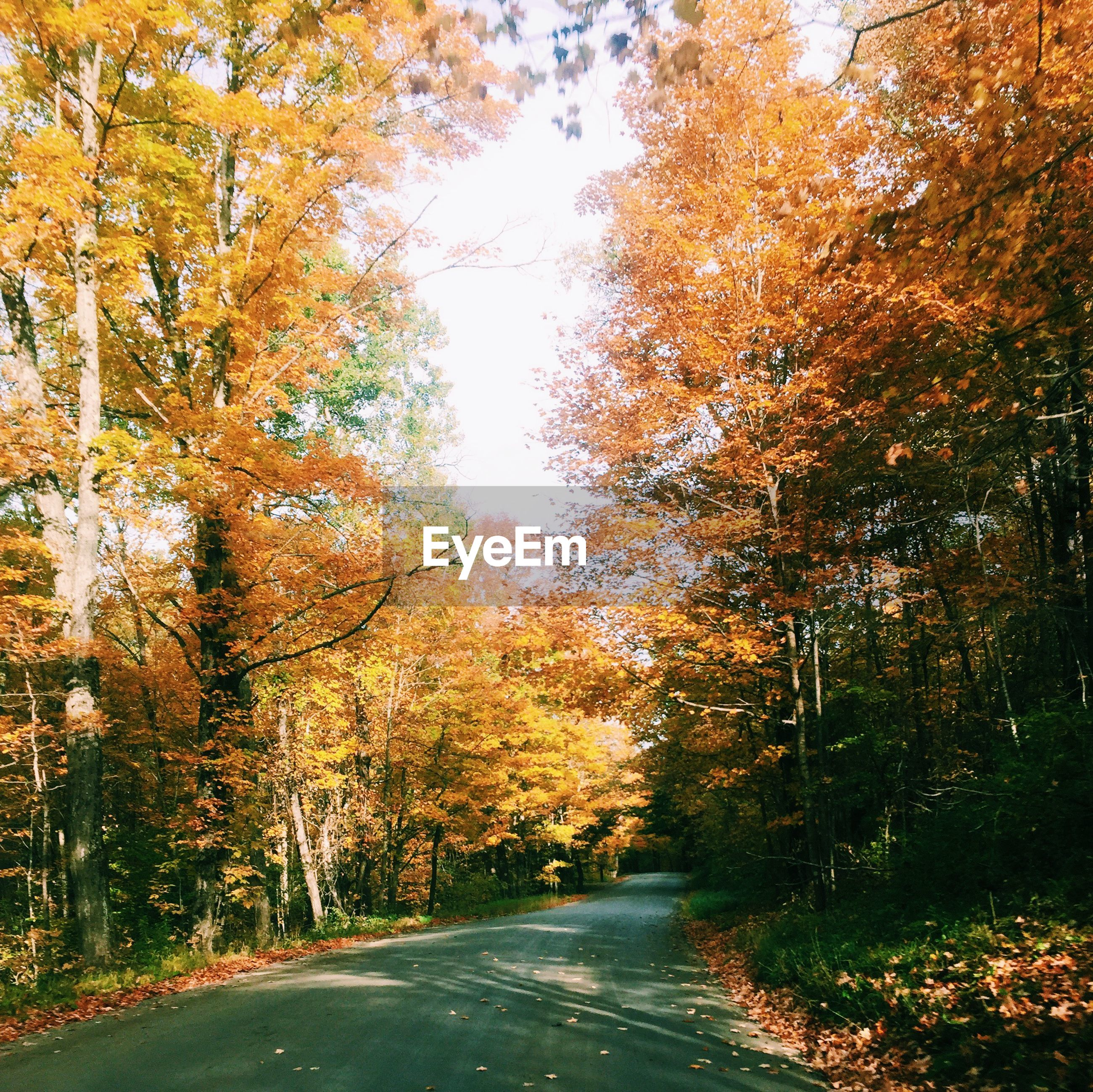 ROAD AMIDST AUTUMN TREES IN FOREST