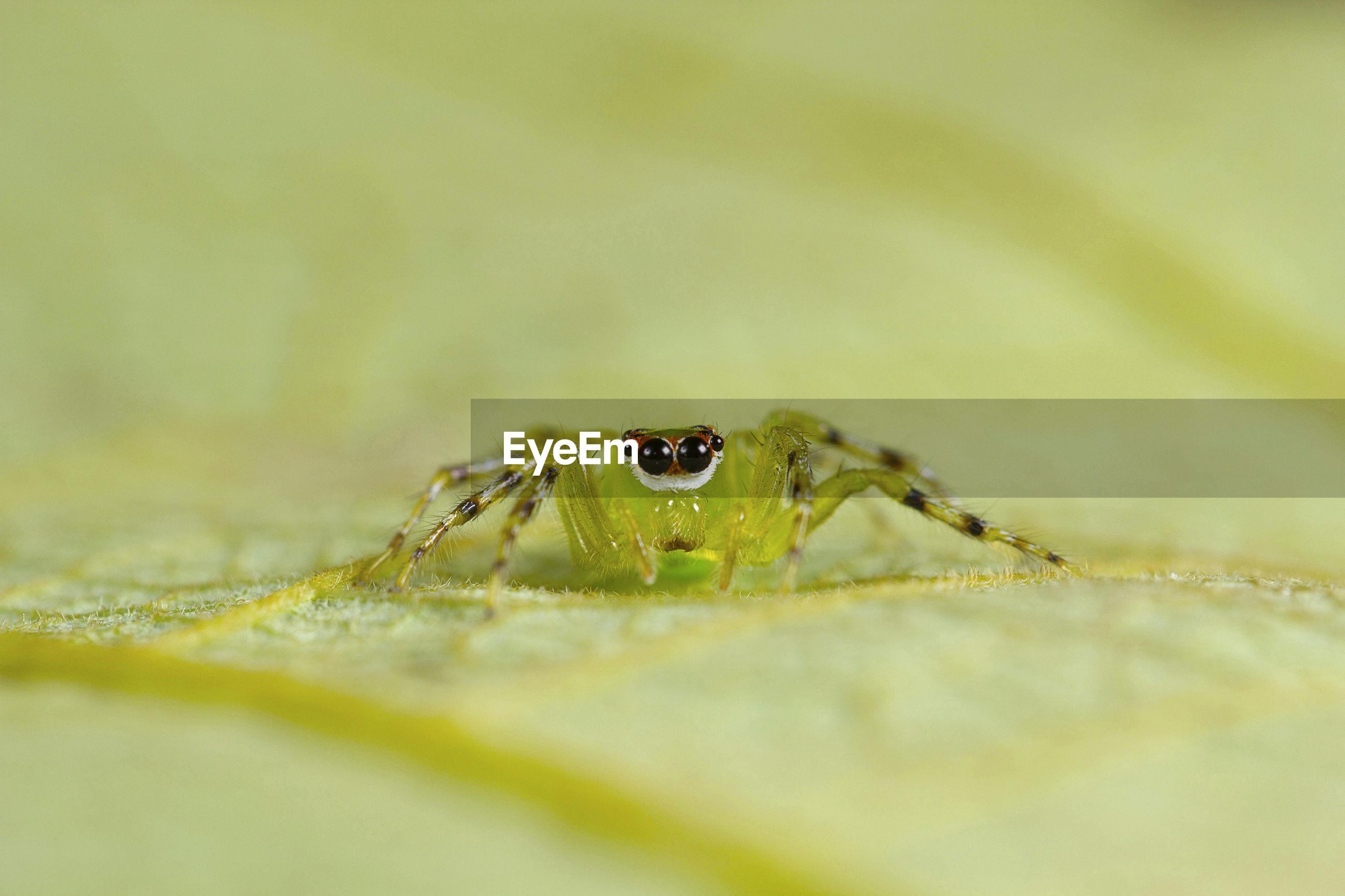 MACRO SHOT OF SPIDER ON LEAF