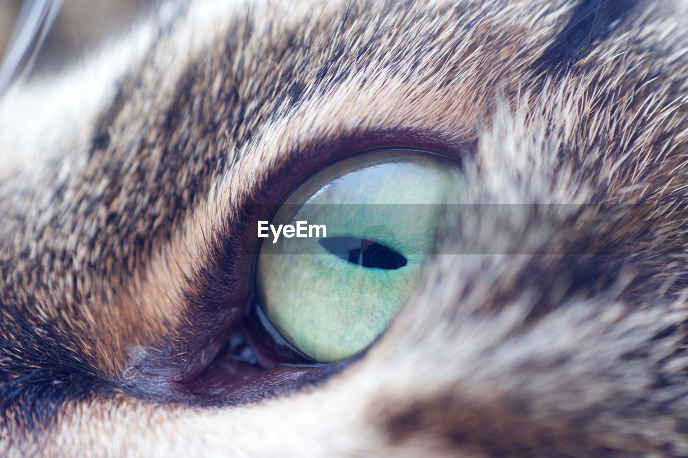 Close-up of cat