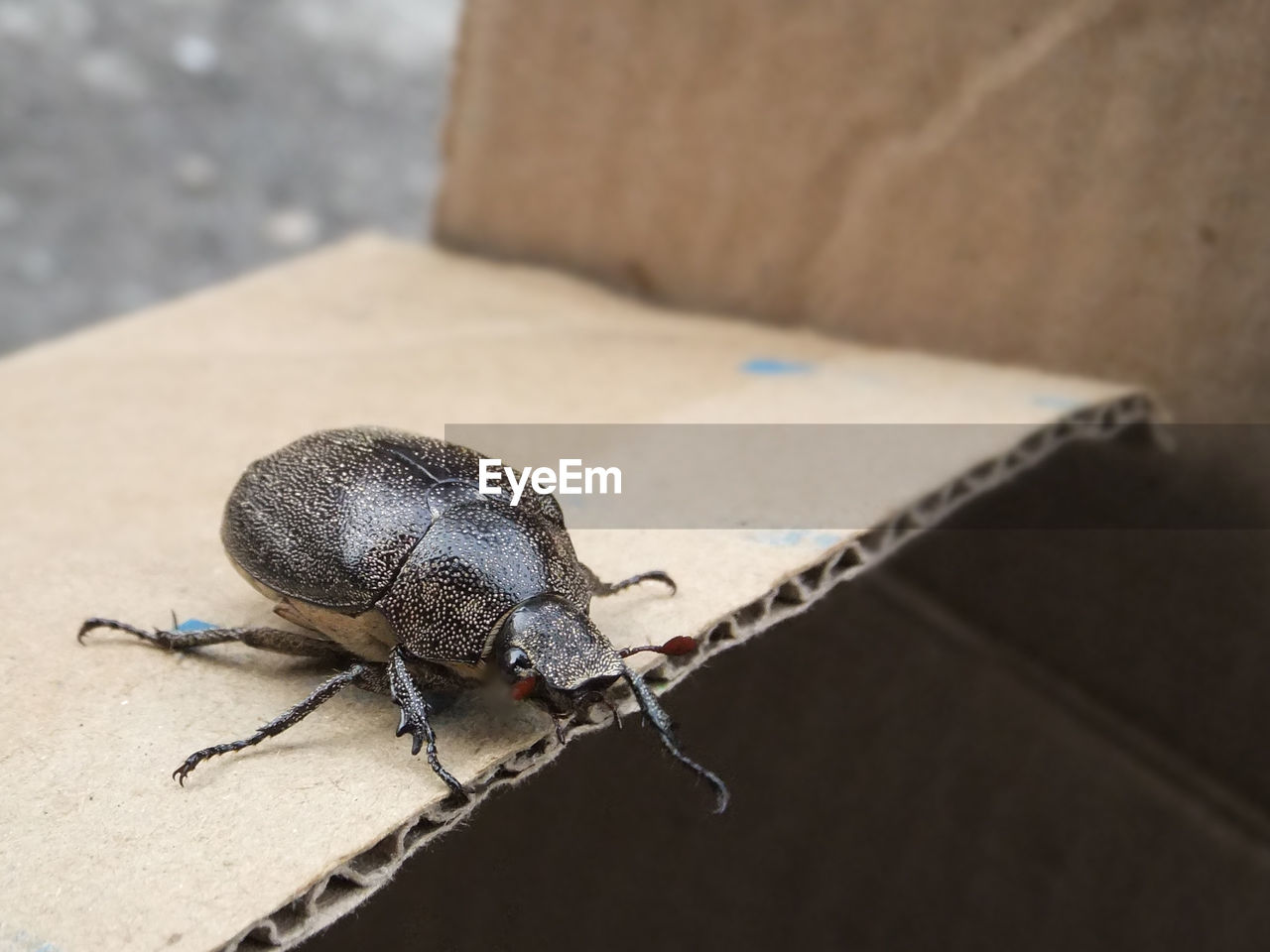 animal themes, one animal, animal, animal wildlife, animals in the wild, invertebrate, close-up, focus on foreground, insect, no people, animal body part, high angle view, animal antenna, day, full length, nature, outdoors, zoology, selective focus, wall