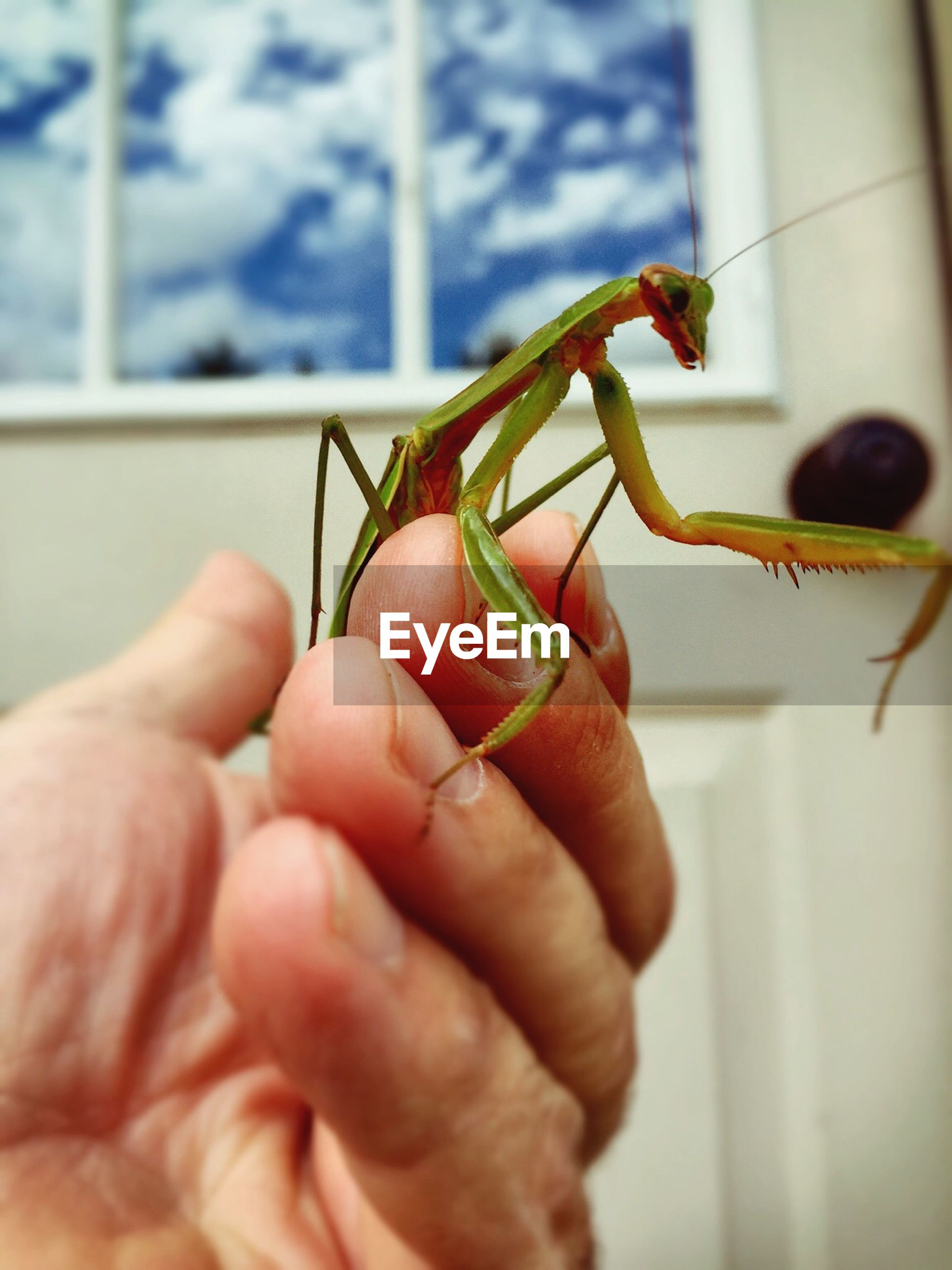 person, holding, human finger, part of, cropped, animal themes, one animal, focus on foreground, indoors, unrecognizable person, close-up, insect, wildlife, animals in the wild, lifestyles, men, leisure activity
