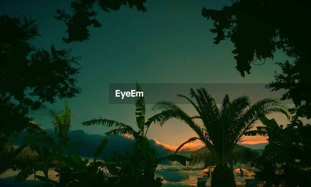 sky, tree, plant, growth, beauty in nature, silhouette, nature, sunset, tranquility, scenics - nature, no people, tranquil scene, palm tree, tropical climate, outdoors, dusk, water, low angle view, leaf, coconut palm tree