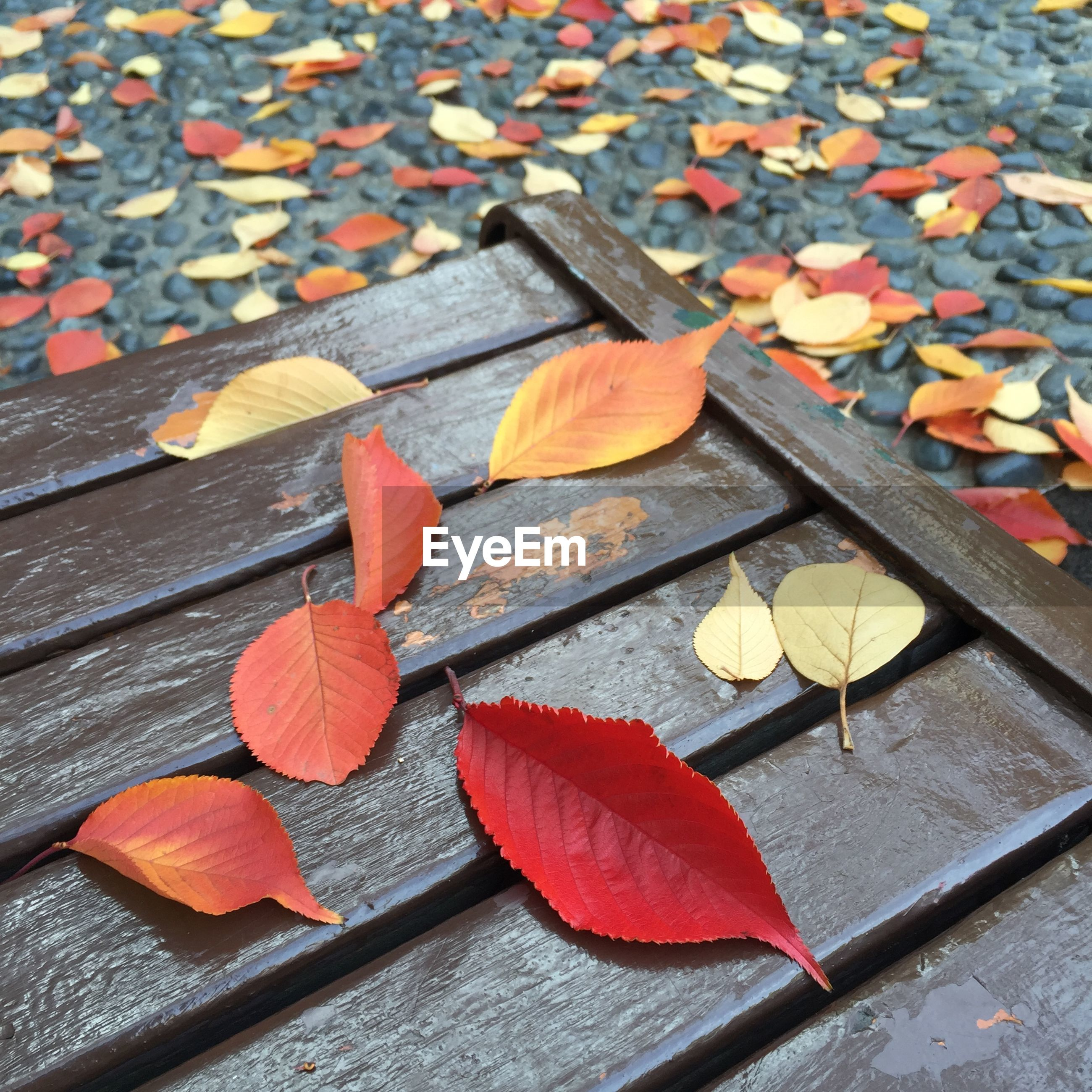 High angle view of autumn leaves on picnic table