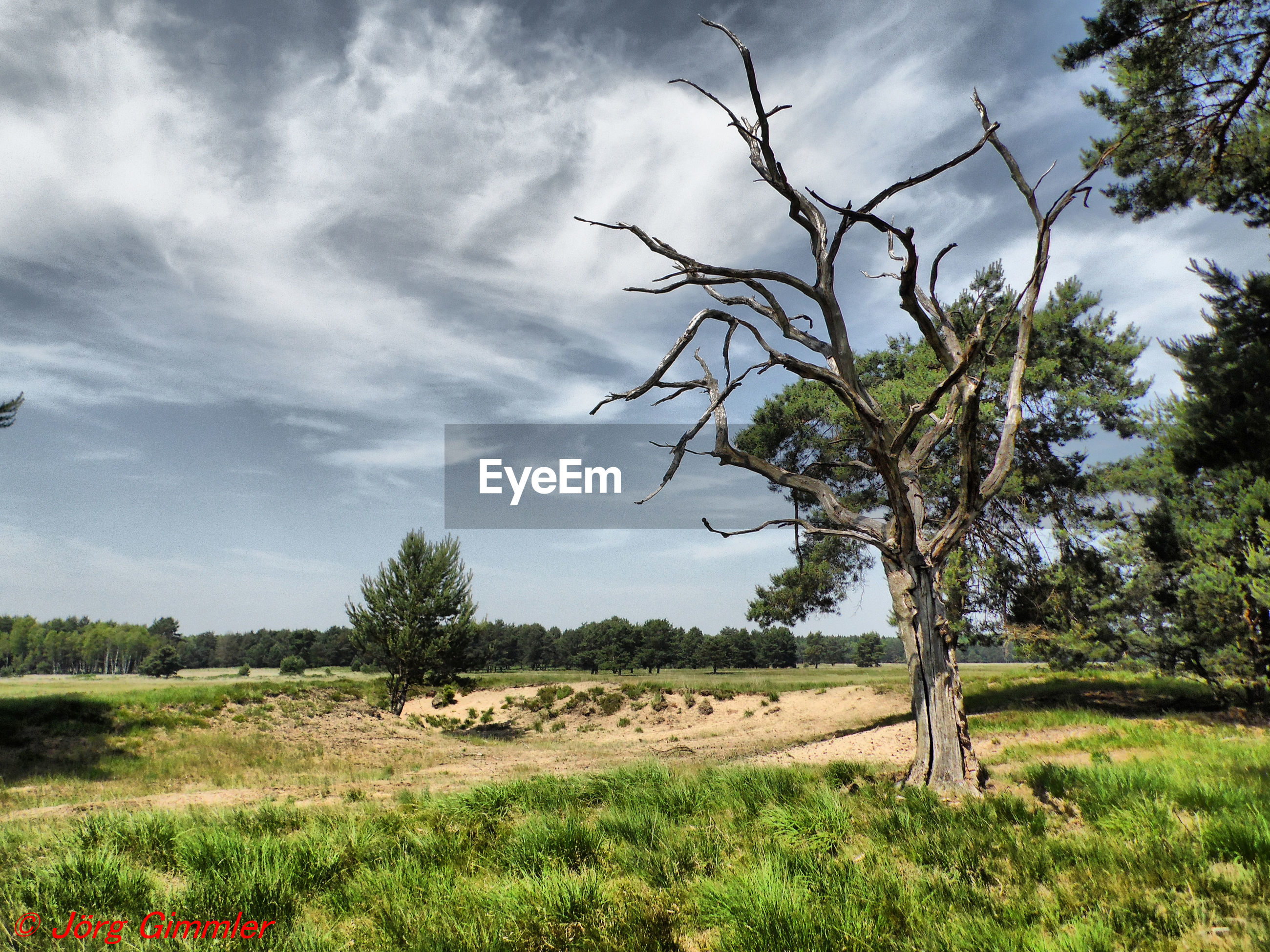 plant, sky, tree, landscape, cloud - sky, environment, land, field, tranquility, tranquil scene, grass, beauty in nature, nature, scenics - nature, no people, non-urban scene, growth, day, outdoors, rural scene