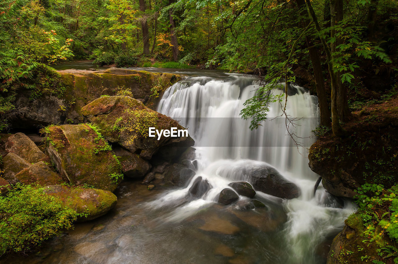 scenics - nature, water, flowing water, waterfall, tree, beauty in nature, plant, motion, forest, long exposure, rock, blurred motion, flowing, rock - object, solid, no people, land, nature, environment, rainforest, power in nature, outdoors, falling water, stream - flowing water, running water