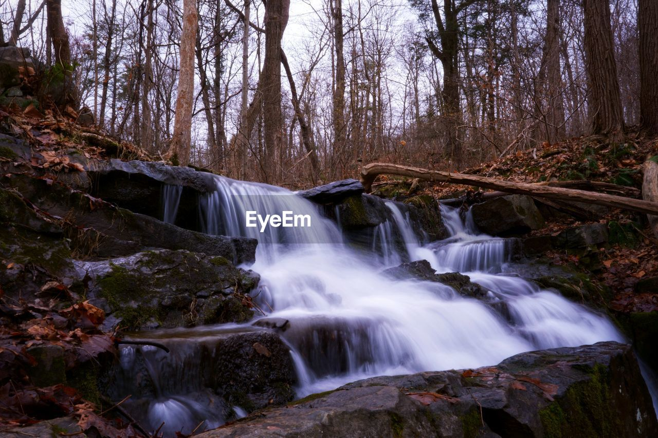 tree, forest, waterfall, scenics - nature, land, motion, flowing water, long exposure, water, beauty in nature, plant, nature, environment, rock, flowing, blurred motion, no people, rock - object, non-urban scene, outdoors, power in nature, rainforest, woodland