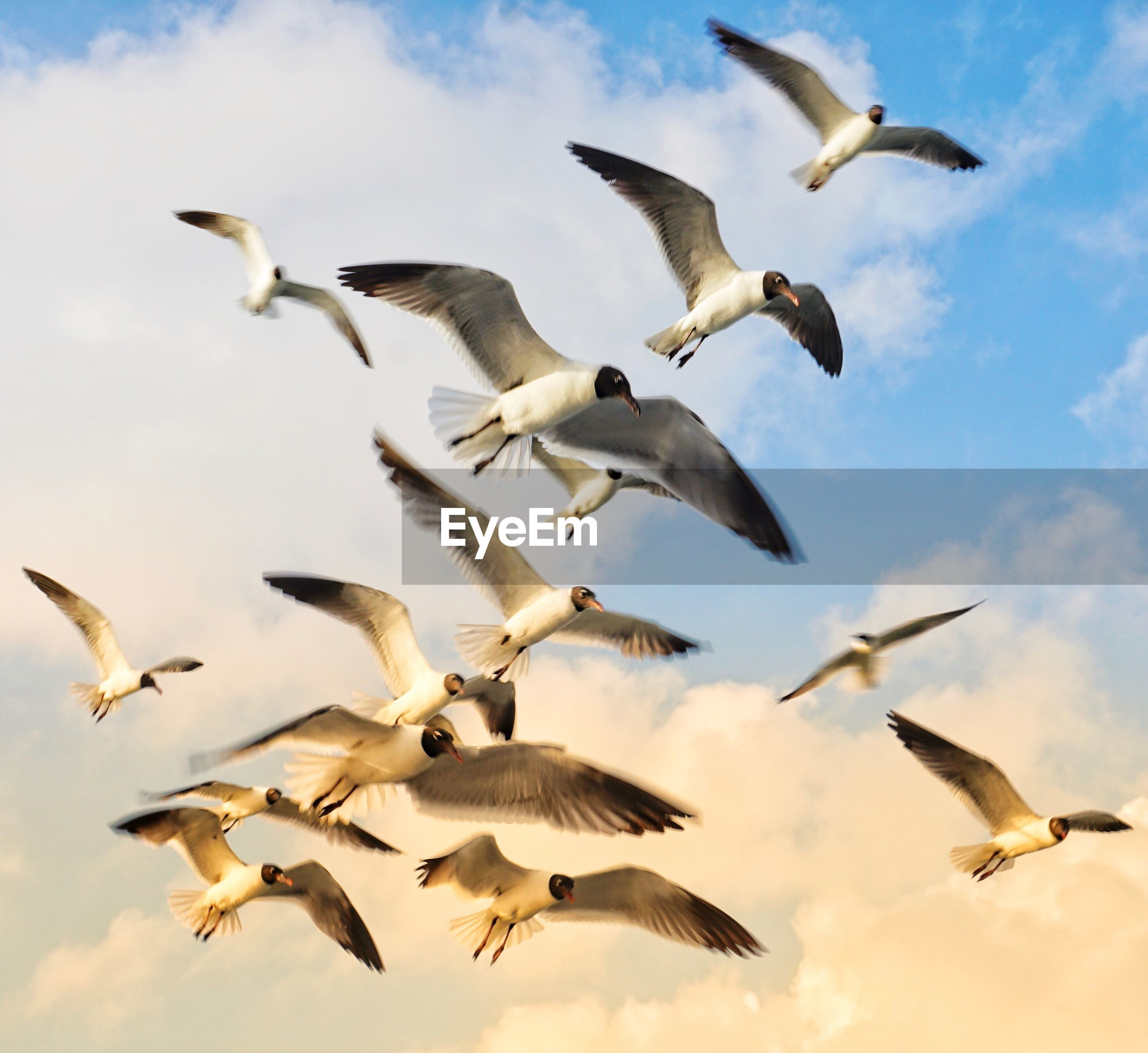 LOW ANGLE VIEW OF SEAGULLS FLYING IN THE SKY