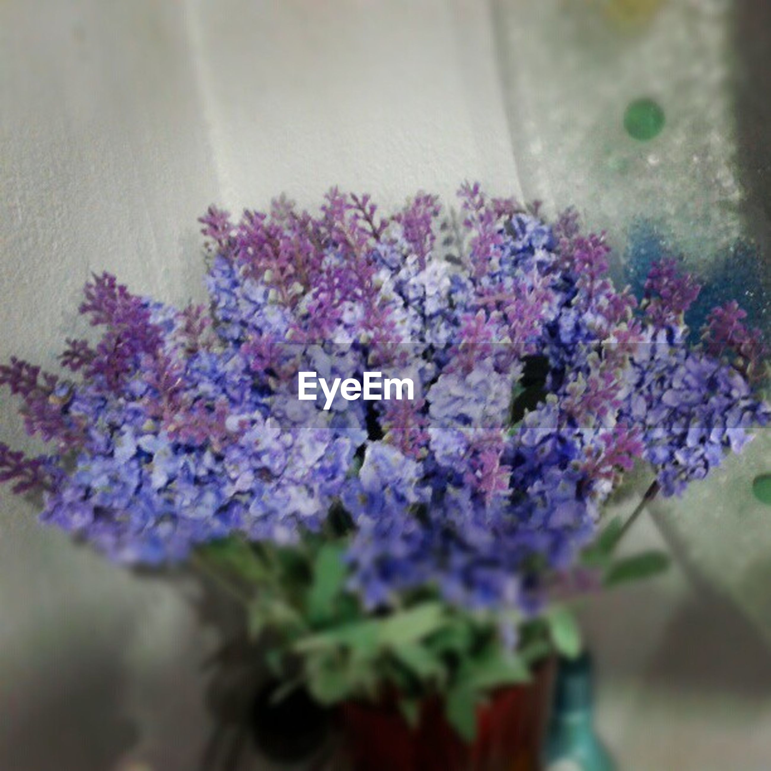 flower, fragility, freshness, growth, purple, plant, close-up, selective focus, beauty in nature, petal, nature, focus on foreground, blooming, flower head, in bloom, bunch of flowers, indoors, potted plant, botany, no people