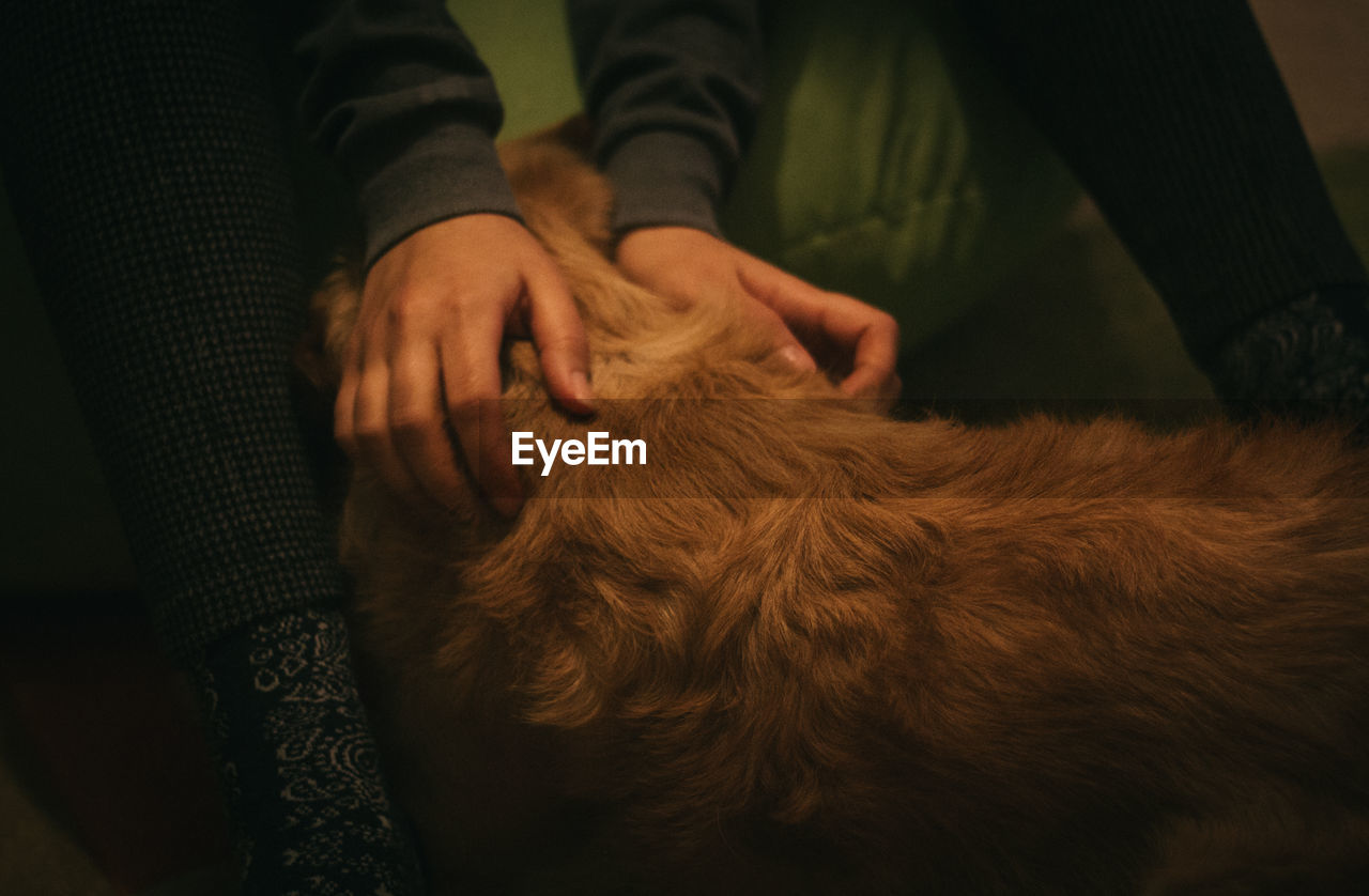 Close-up Of Hands Petting Dog