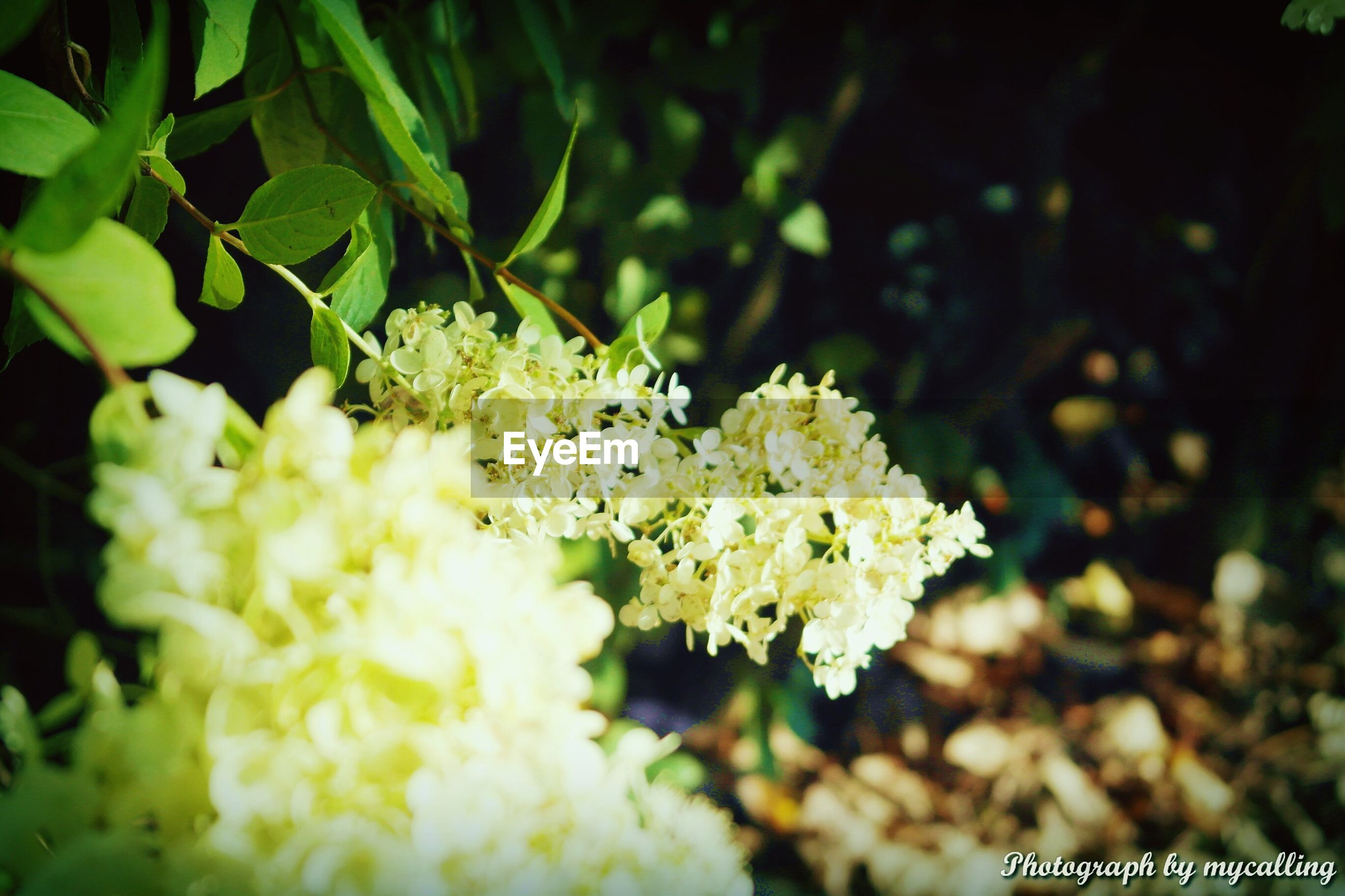flower, growth, freshness, fragility, beauty in nature, petal, white color, nature, plant, close-up, blooming, flower head, focus on foreground, blossom, in bloom, leaf, selective focus, outdoors, no people, day