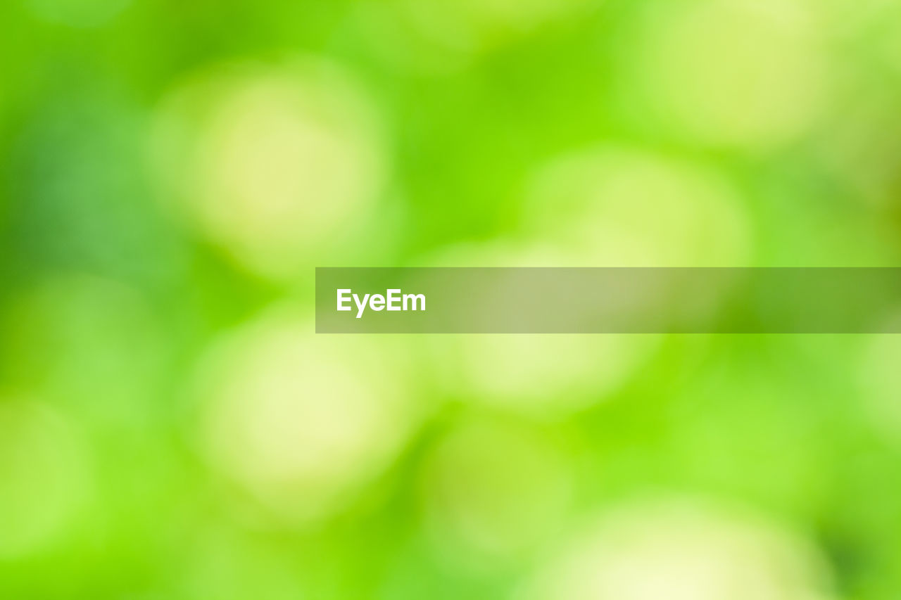 nature, focus on foreground, green color, no people, defocused, beauty in nature, day, outdoors, backgrounds, close-up, growth, freshness, fragility