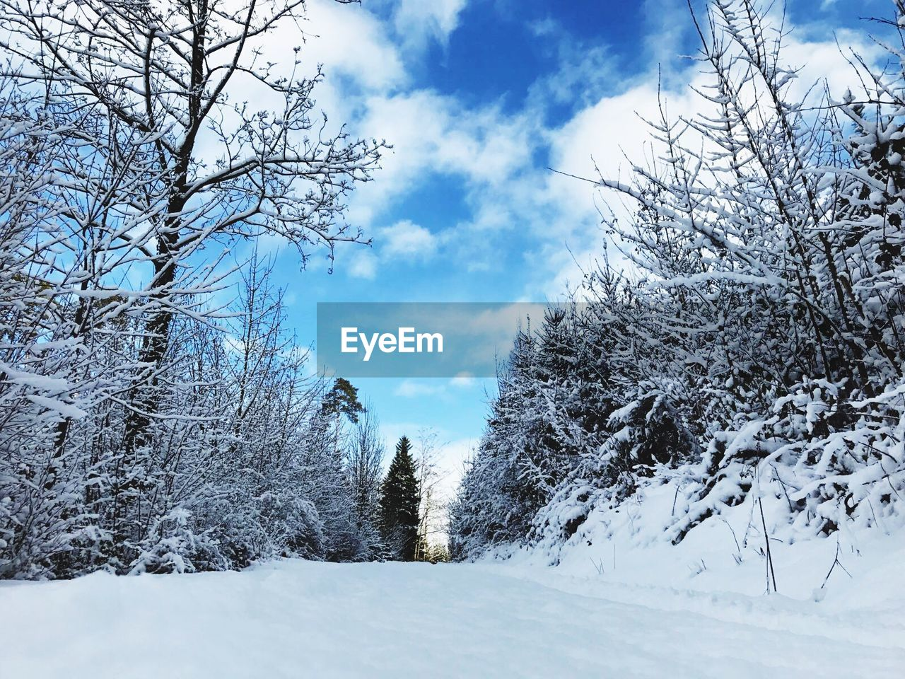 snow, winter, cold temperature, nature, beauty in nature, tranquility, tree, tranquil scene, weather, sky, bare tree, scenics, no people, cloud - sky, day, outdoors, landscape, low angle view, branch