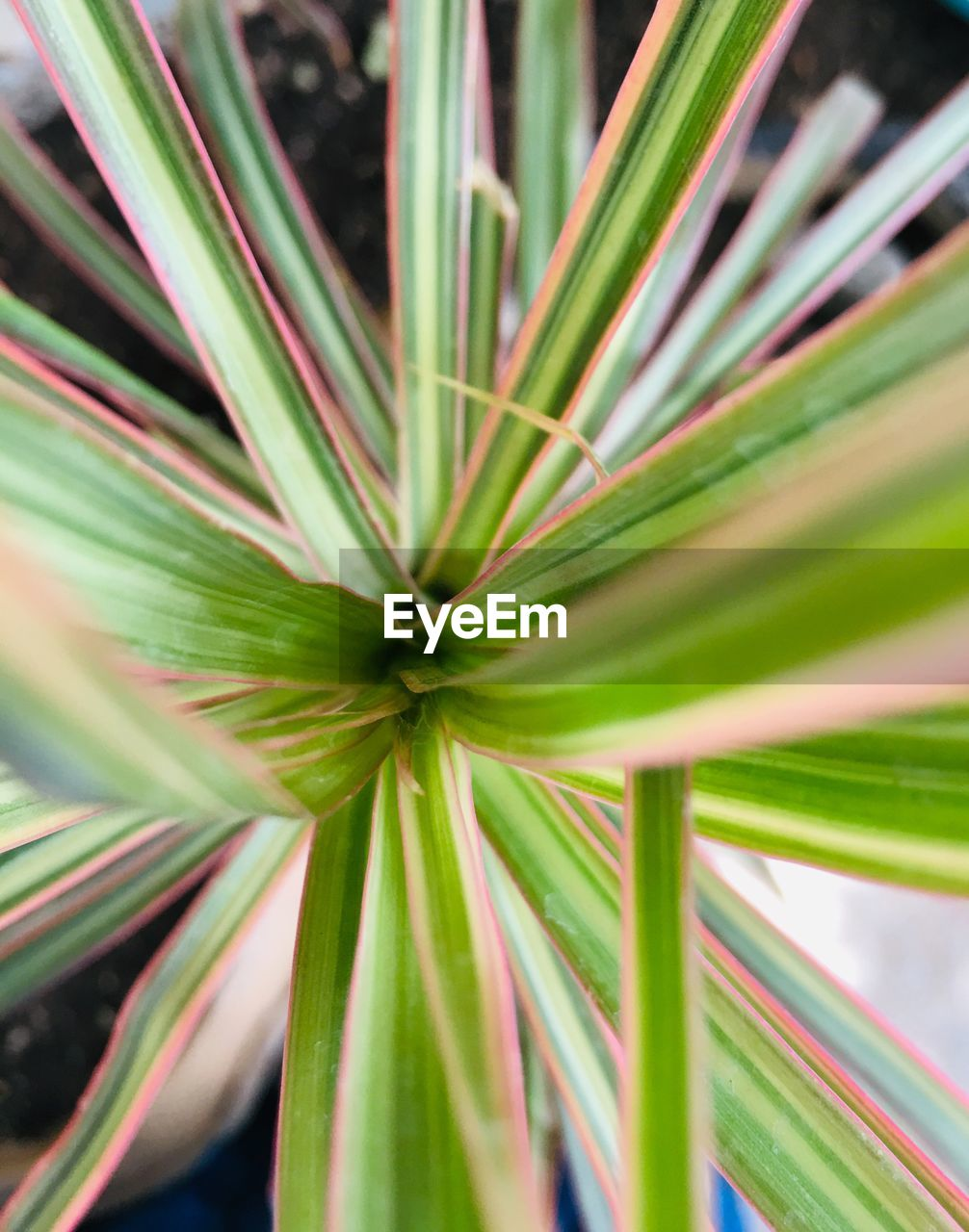 green color, growth, plant part, plant, leaf, close-up, beauty in nature, day, no people, nature, selective focus, outdoors, focus on foreground, full frame, natural pattern, palm tree, backgrounds, botany, tropical climate, freshness, palm leaf