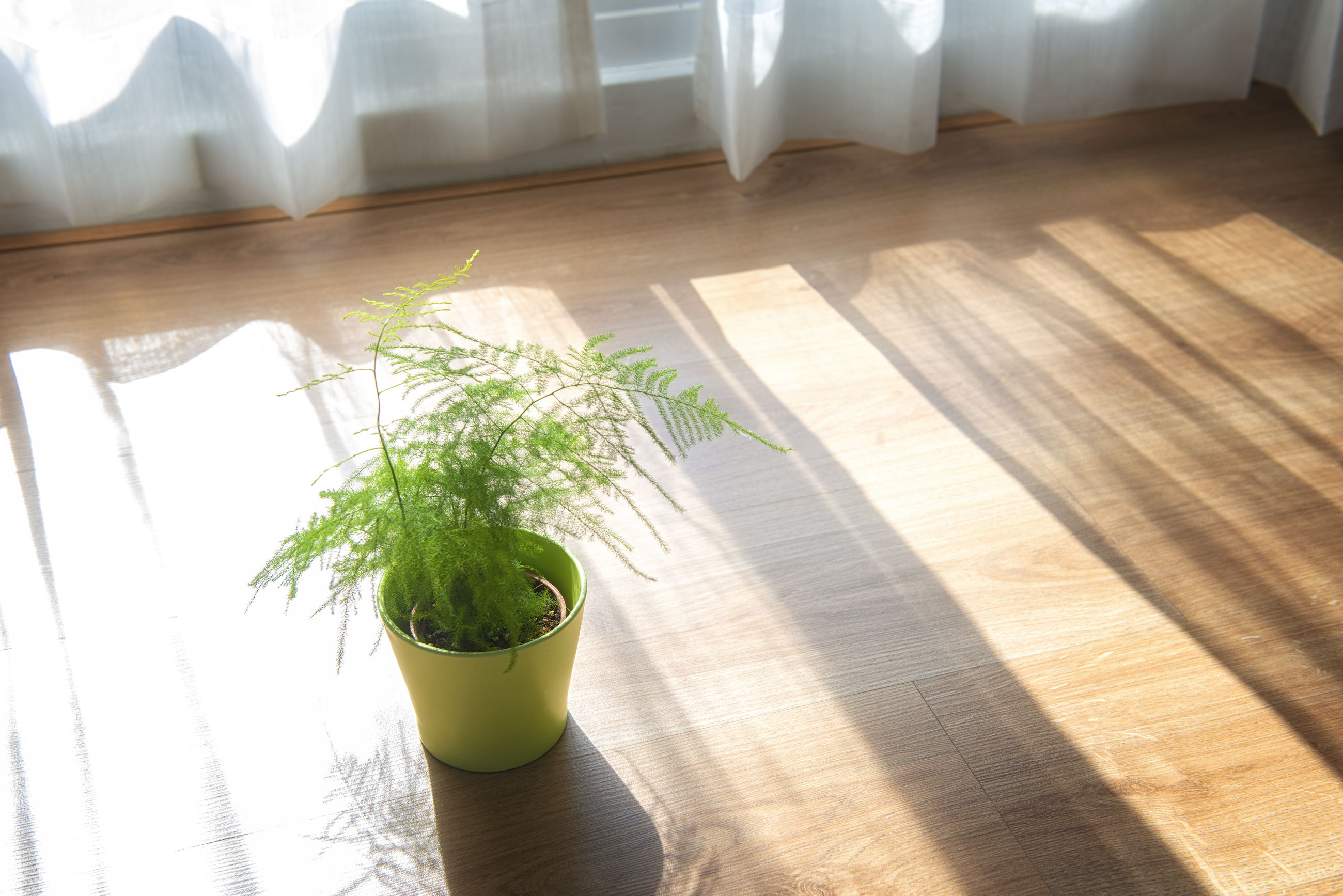 Potted plant on hardwood floor at home