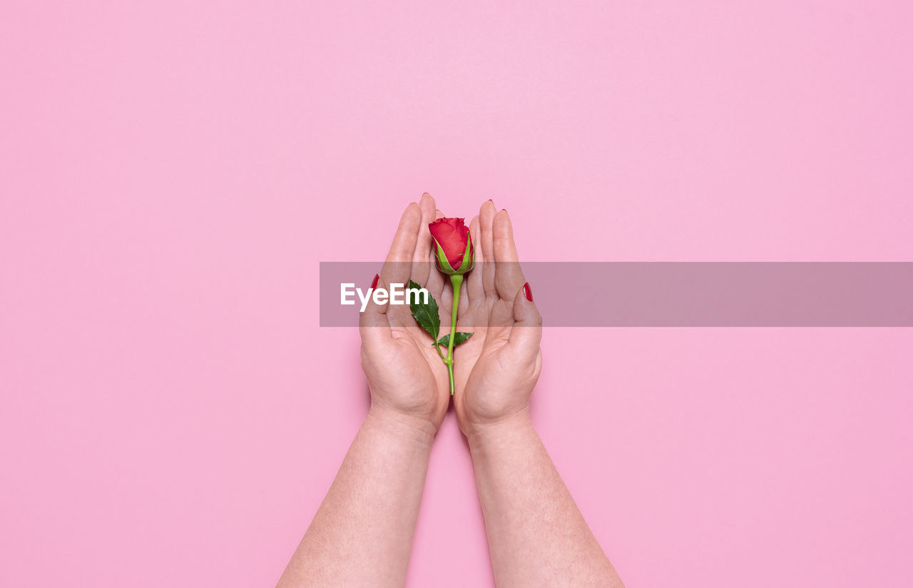 CLOSE-UP OF WOMAN HAND HOLDING PINK FLOWER AGAINST WHITE BACKGROUND