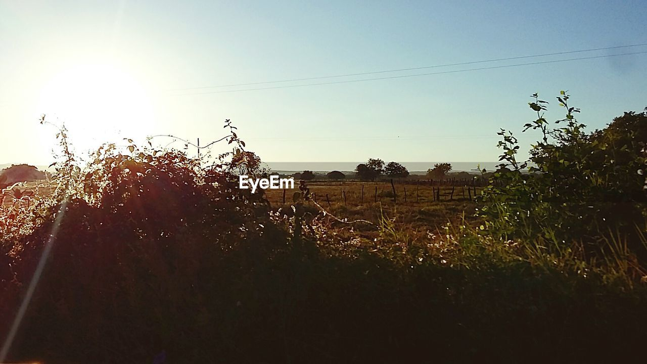 growth, sun, nature, agriculture, tree, plant, no people, field, sunlight, outdoors, sky, landscape, sunset, beauty in nature, rural scene, day, clear sky