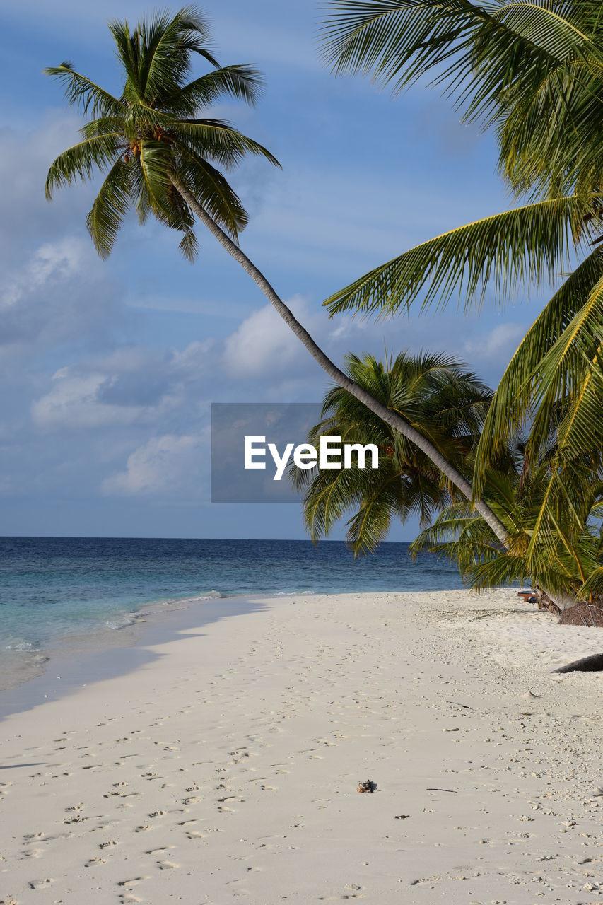 Coconut Palm Trees At Beach Against Sky
