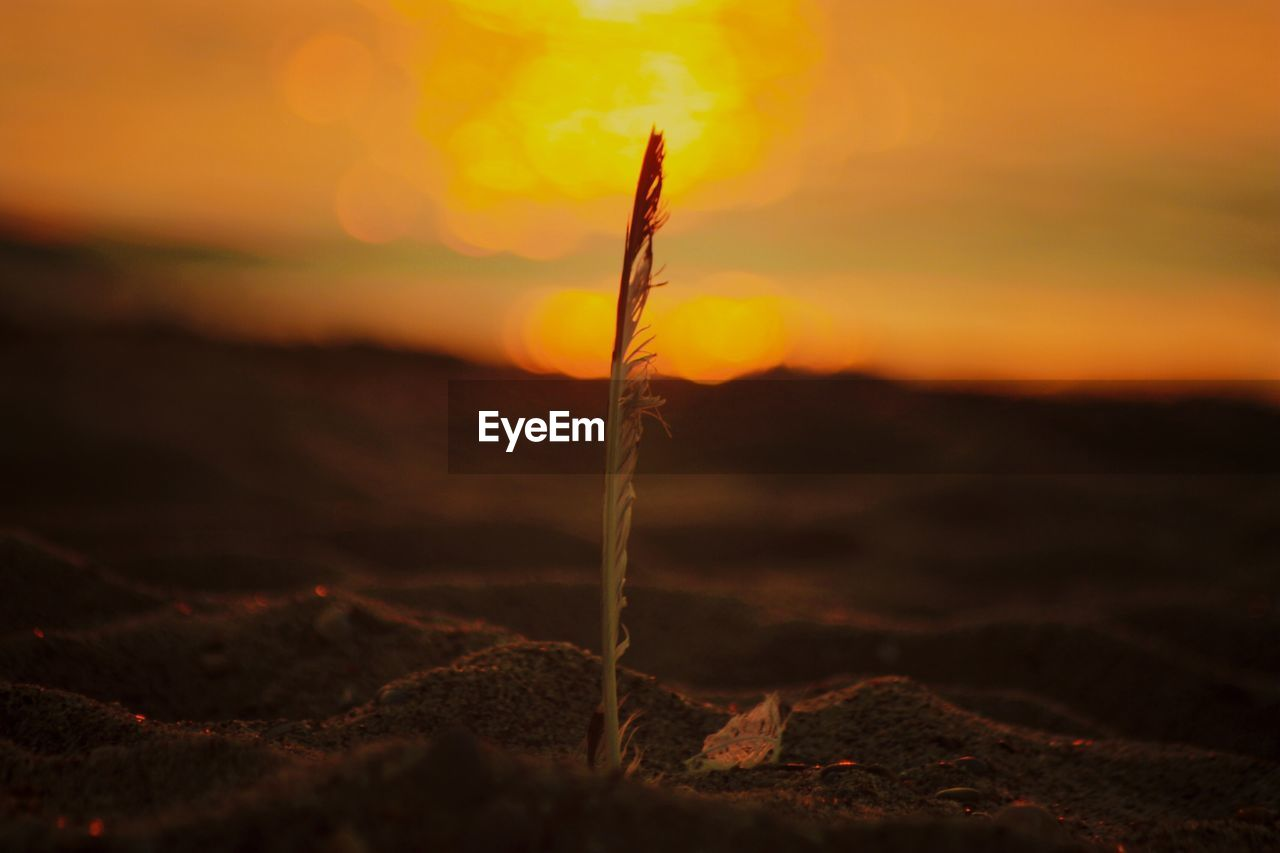 sunset, nature, close-up, tranquility, land, beauty in nature, no people, sky, orange color, selective focus, outdoors, growth, plant, focus on foreground, scenics - nature, field, environment, tranquil scene, plant part, sunlight