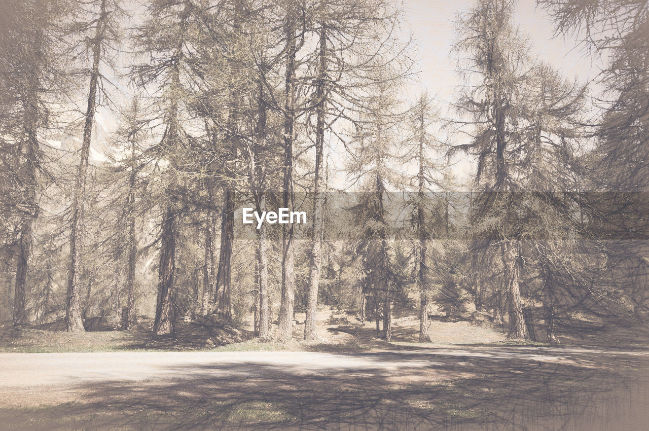 tree, forest, woodland, no people, nature, pine tree, day, landscape, outdoors, beauty in nature