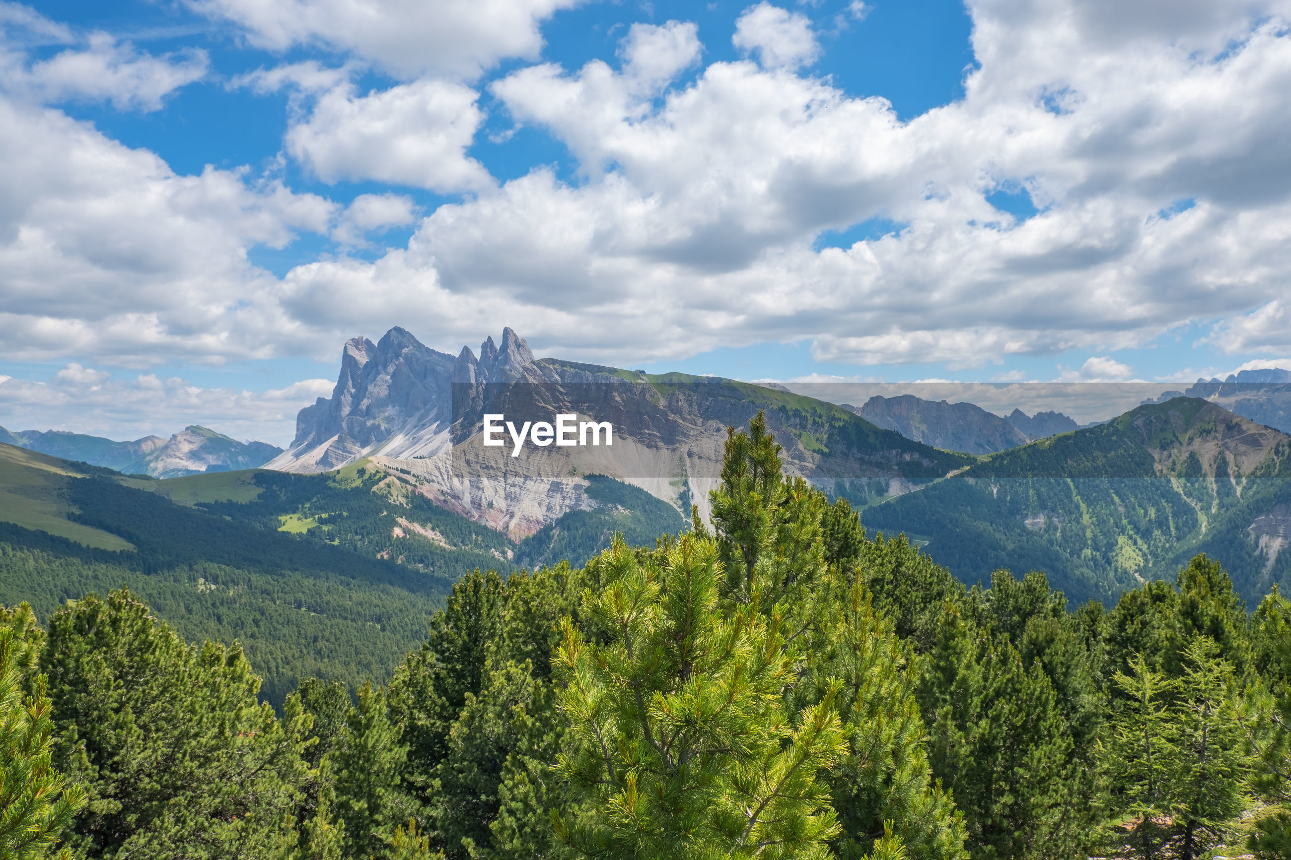 PANORAMIC SHOT OF TREES ON MOUNTAINS AGAINST SKY