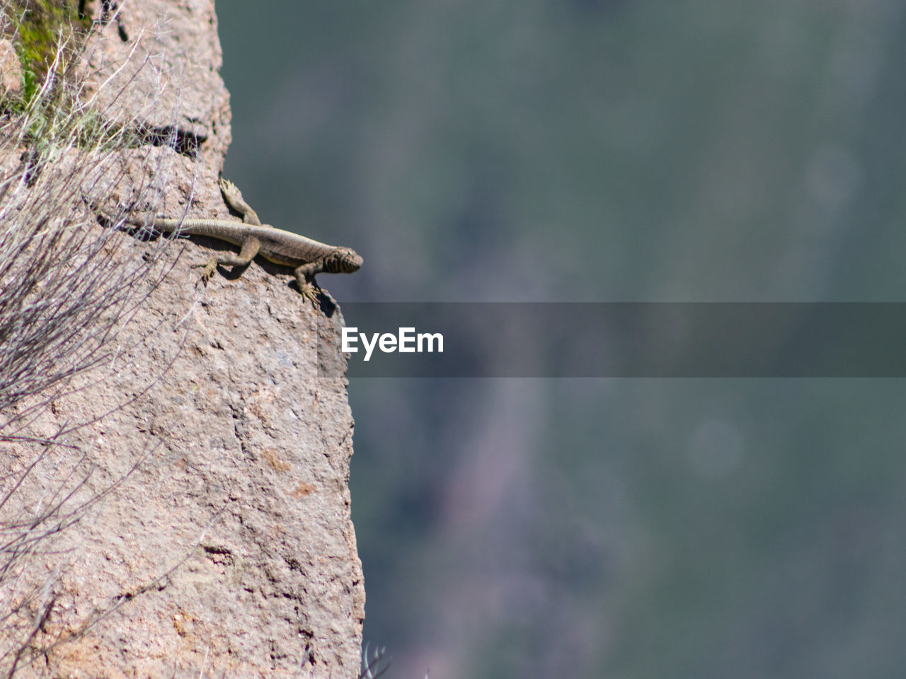 CLOSE-UP OF LIZARD ON ROCK AGAINST TREE