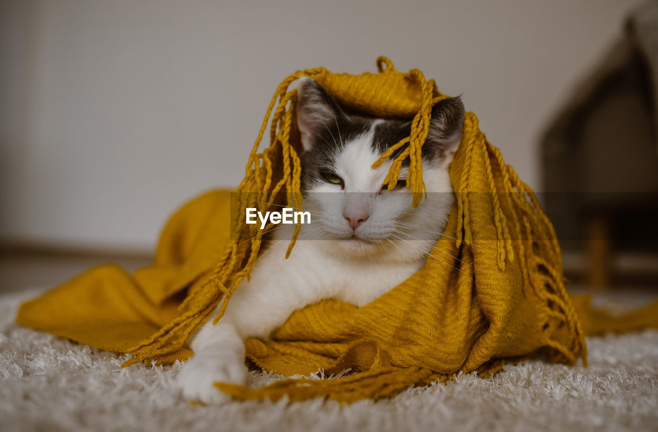 CAT RESTING ON RUG