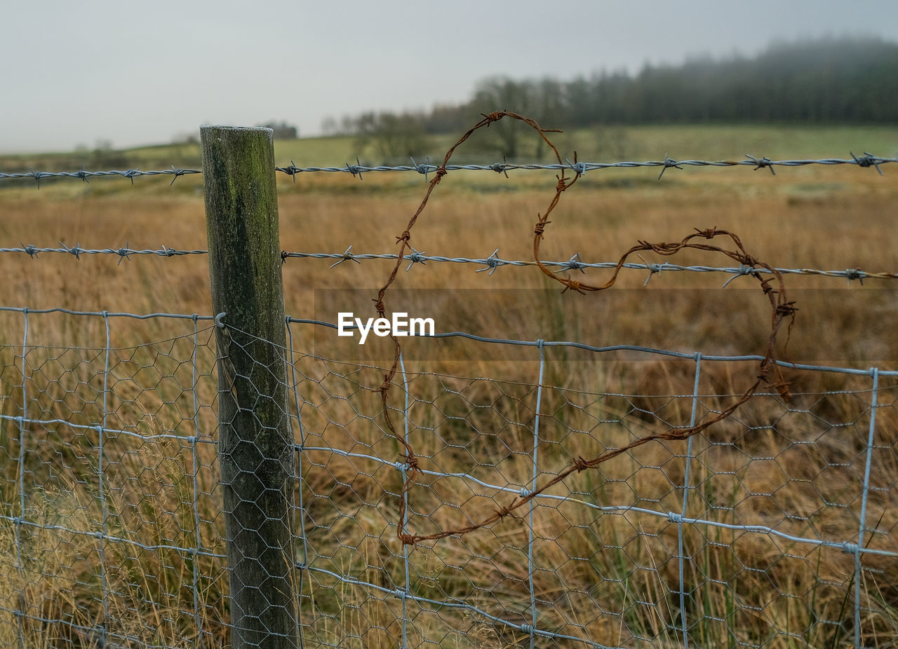 fence, barrier, boundary, protection, security, barbed wire, safety, land, wire, field, focus on foreground, nature, metal, no people, day, plant, grass, landscape, sharp, outdoors