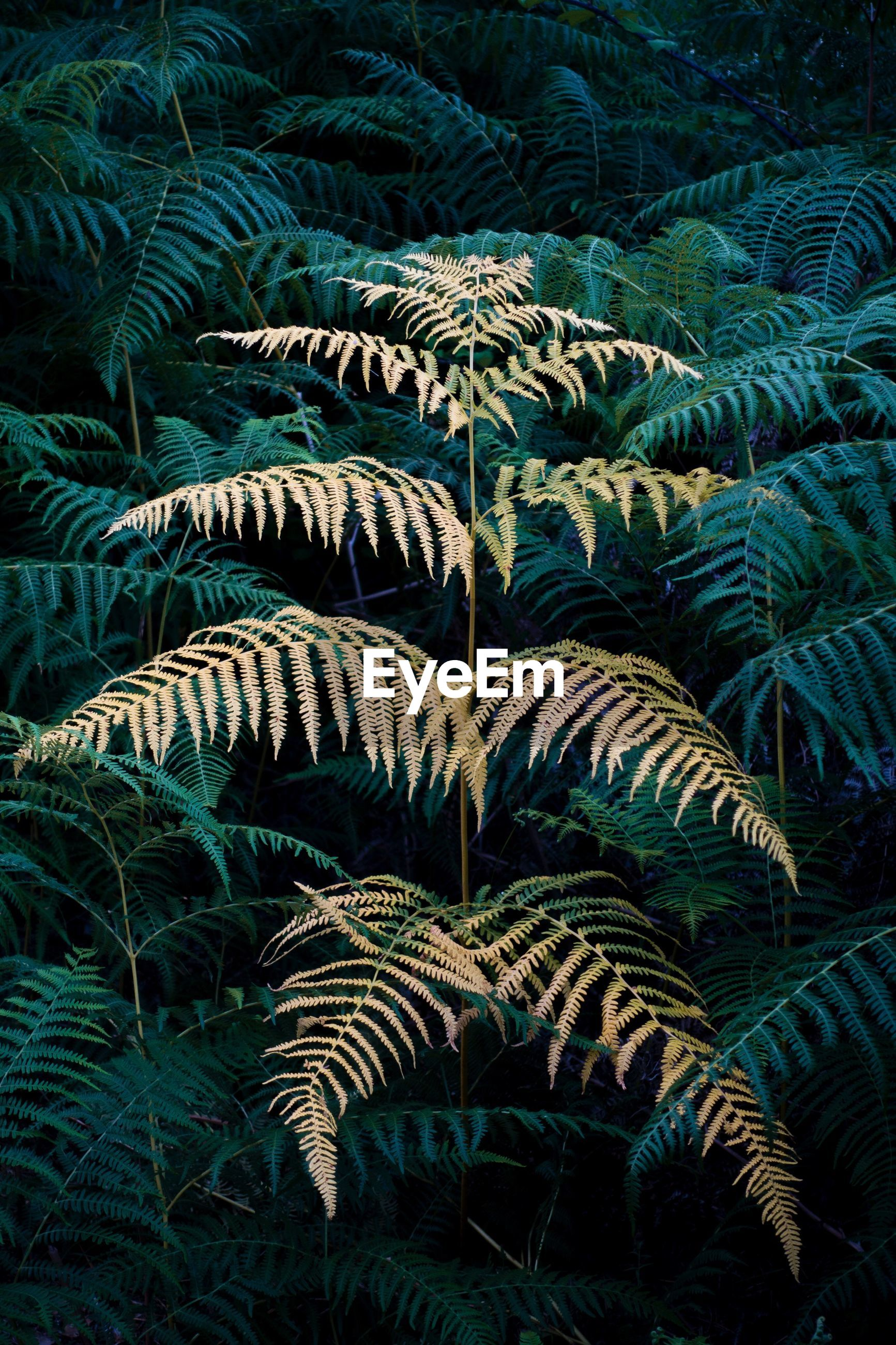 fern, green color, plant, growth, nature, no people, frond, full frame, leaf, palm tree, beauty in nature, outdoors, day