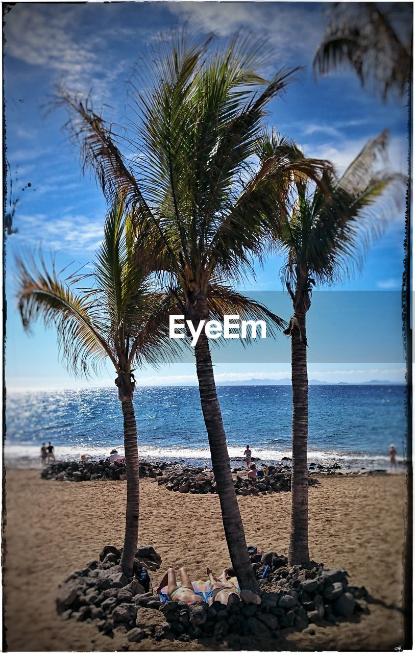beach, sea, palm tree, sand, water, tree, horizon over water, shore, nature, sky, beauty in nature, day, scenics, outdoors, tree trunk, real people, vacations, tranquility, men, branch, one person, people