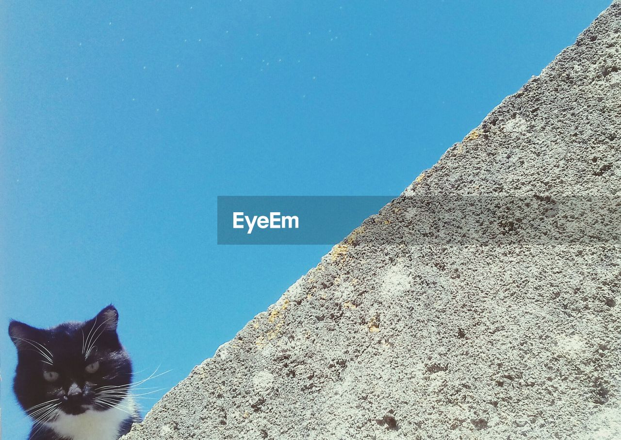Low Angle View Of Cat Against Clear Blue Sky