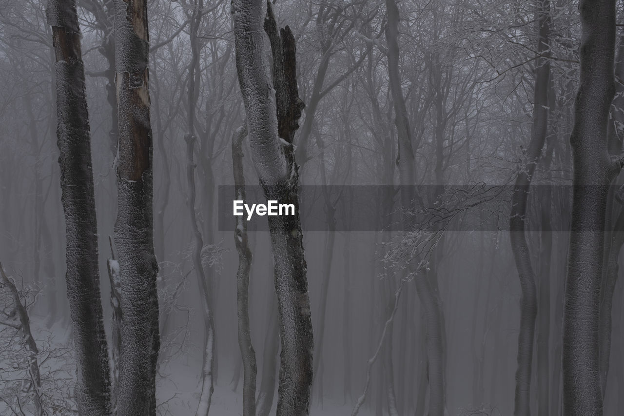 tree, plant, forest, trunk, tree trunk, no people, land, tranquility, winter, cold temperature, bare tree, nature, beauty in nature, day, tranquil scene, snow, woodland, growth, scenics - nature, outdoors