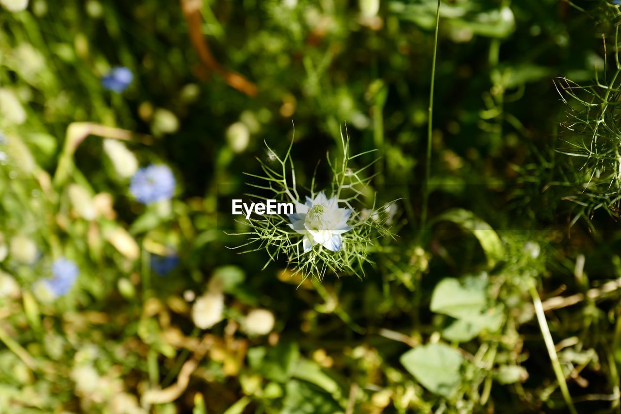 plant, growth, beauty in nature, flower, flowering plant, day, nature, green color, vulnerability, close-up, no people, fragility, freshness, one animal, selective focus, flower head, focus on foreground, outdoors, inflorescence, land, dandelion seed